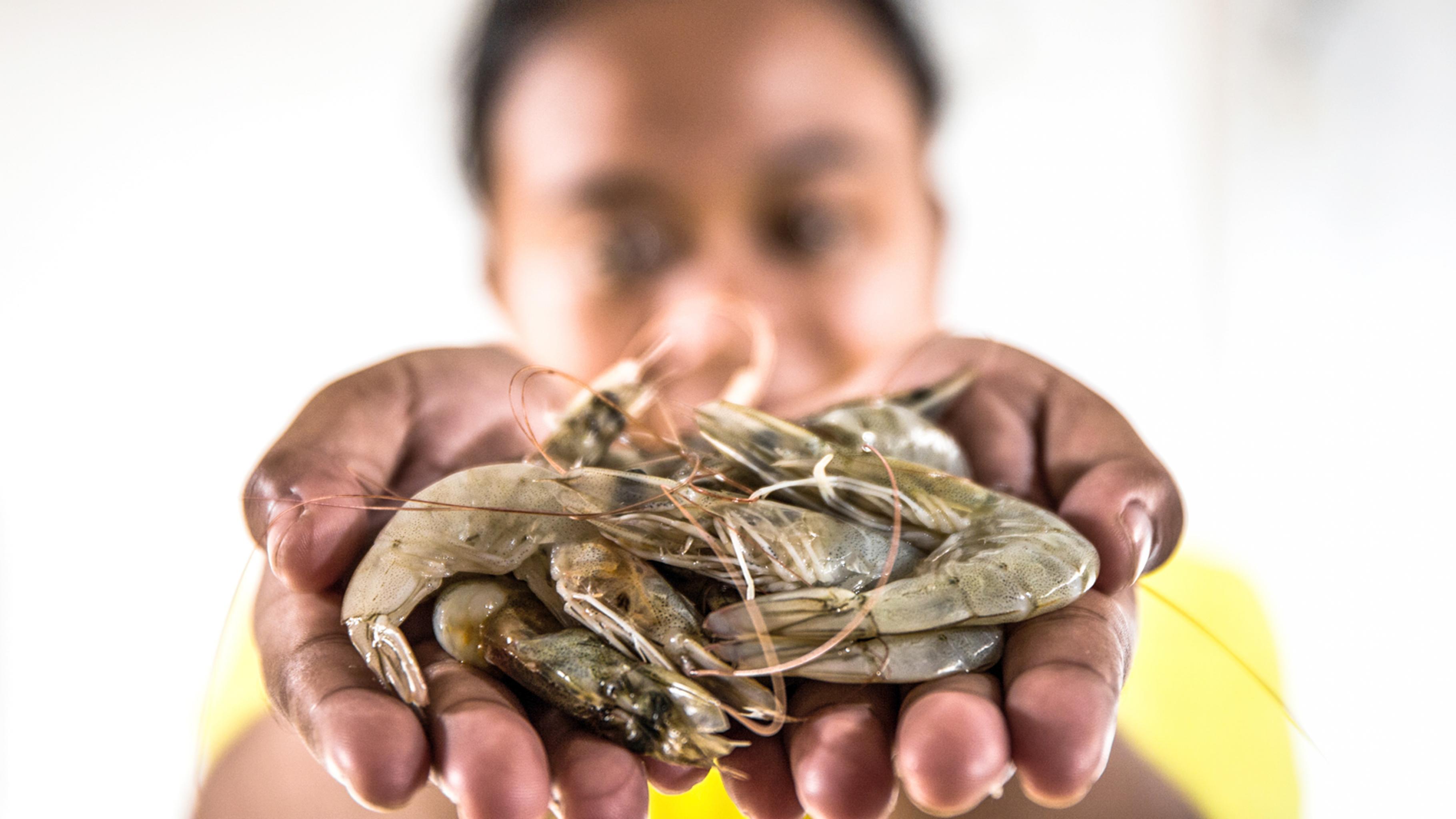Supermärkte importieren Garnelen von weit her. Die Menschen, die sie fischen, pulen und verpacken, werden oft ausgebeutet und Gefahren ausgesetzt.