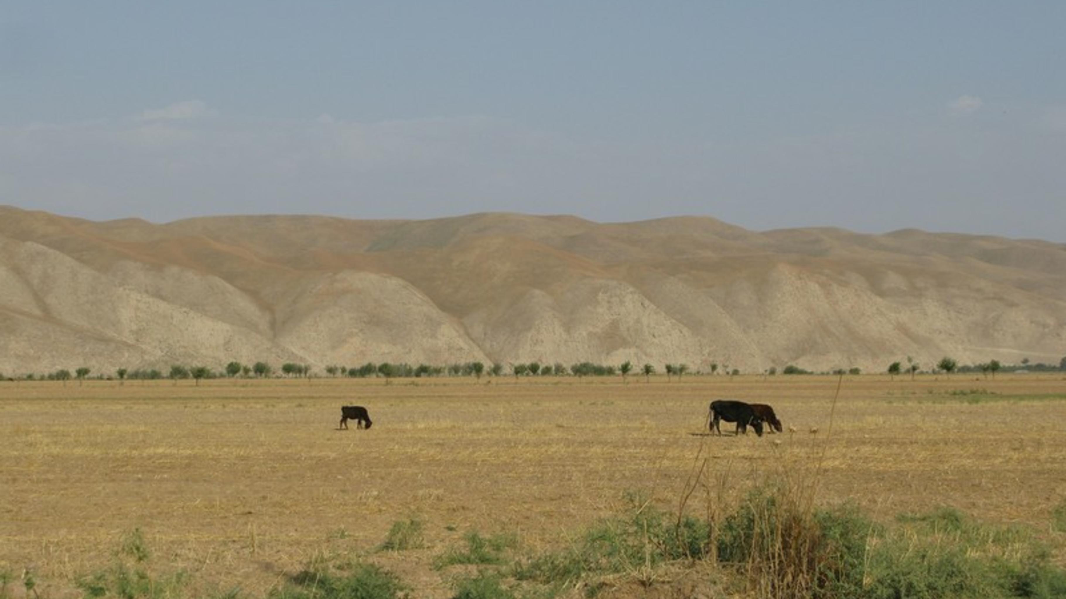 Temurmalik-Distrikt, im Süden Tadschikistans.