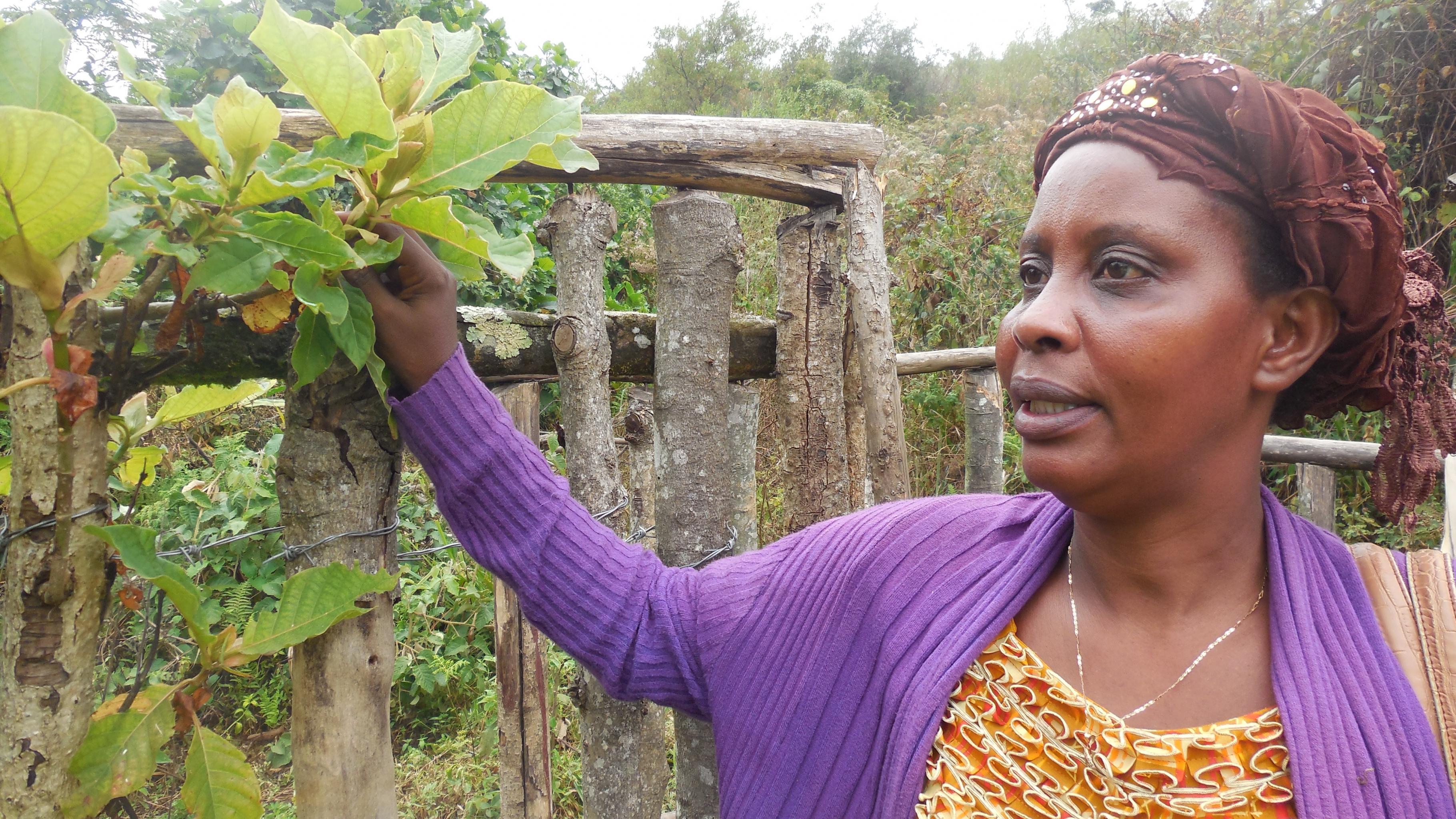 Gudile Nasine von Oxfams kongolesischer Partnerorganisation zeigt, wie Bäume als natürliche Einzäunungen für Felder und Quelleinfassungen genutzt werden.