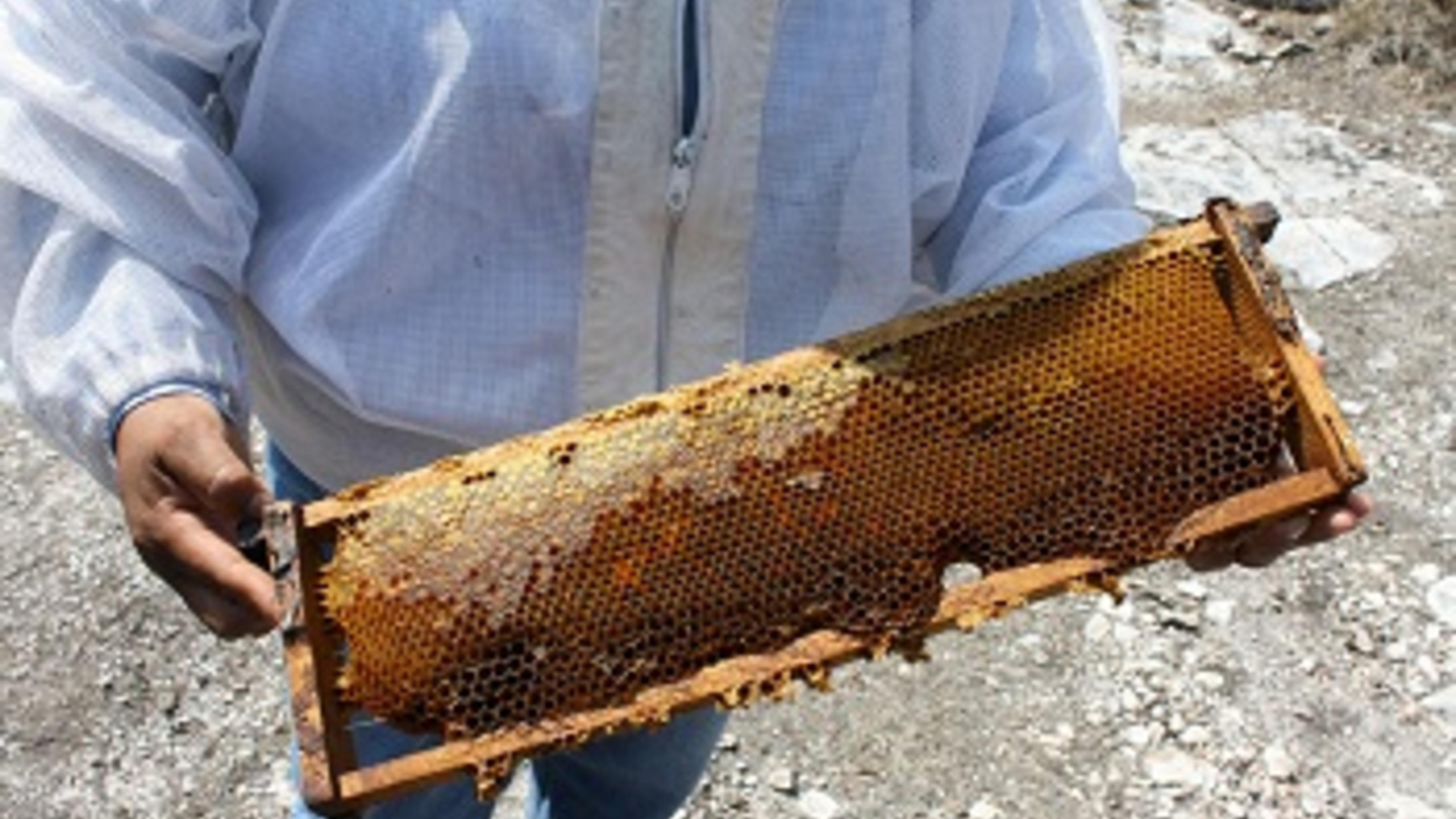 Die Region Tepexi ist trockener geworden, was die Bienenzucht erschwert.