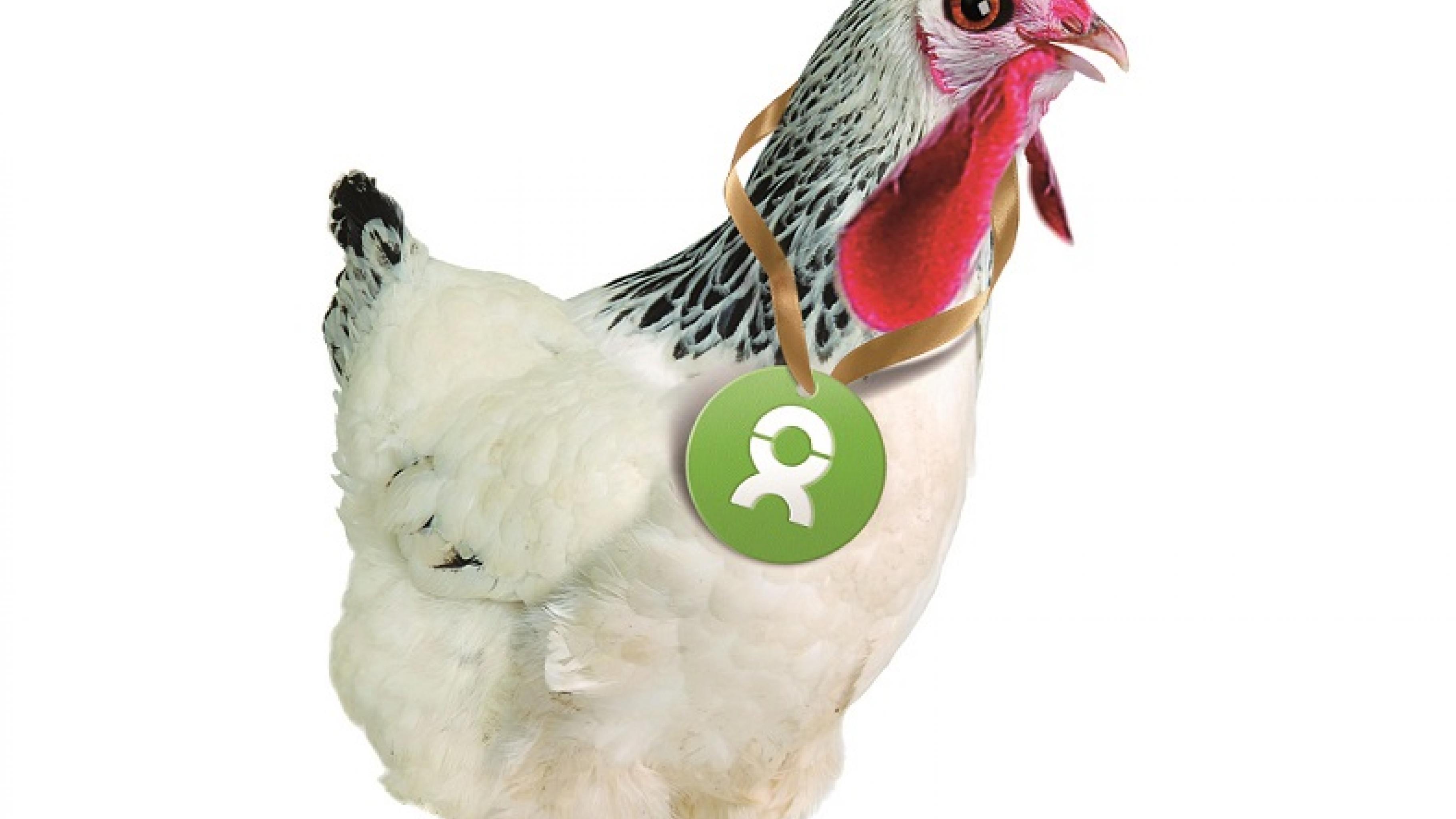 OxfamUnverpackt_Geschenk Huhn