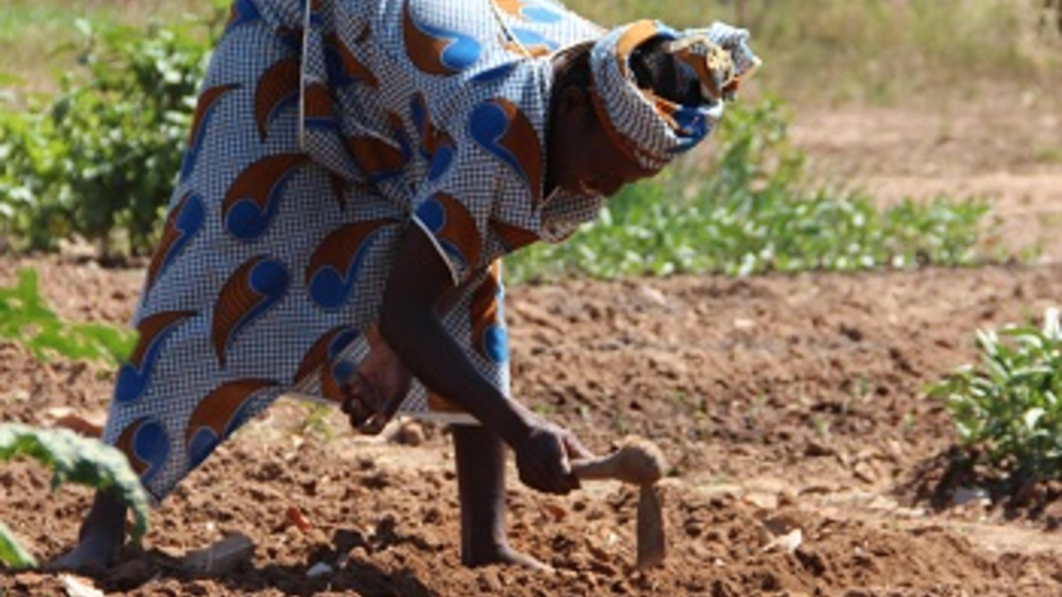 Gartenarbeit ist in Mali Frauensache. ©Svenja Koch/Oxfam