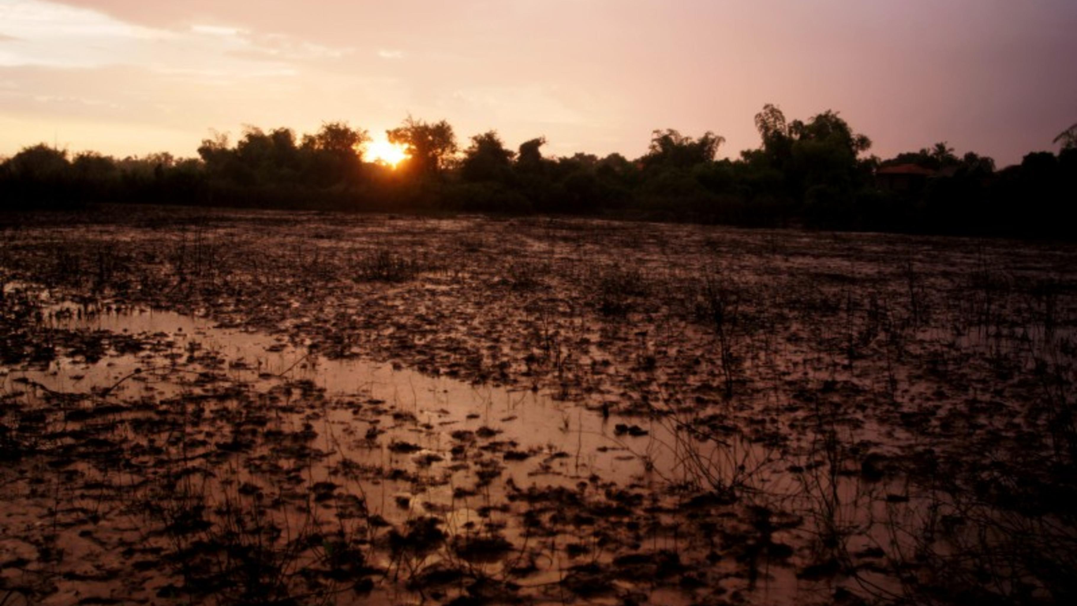 Überschwemmtes Reisfeld bei Sonnenuntergang