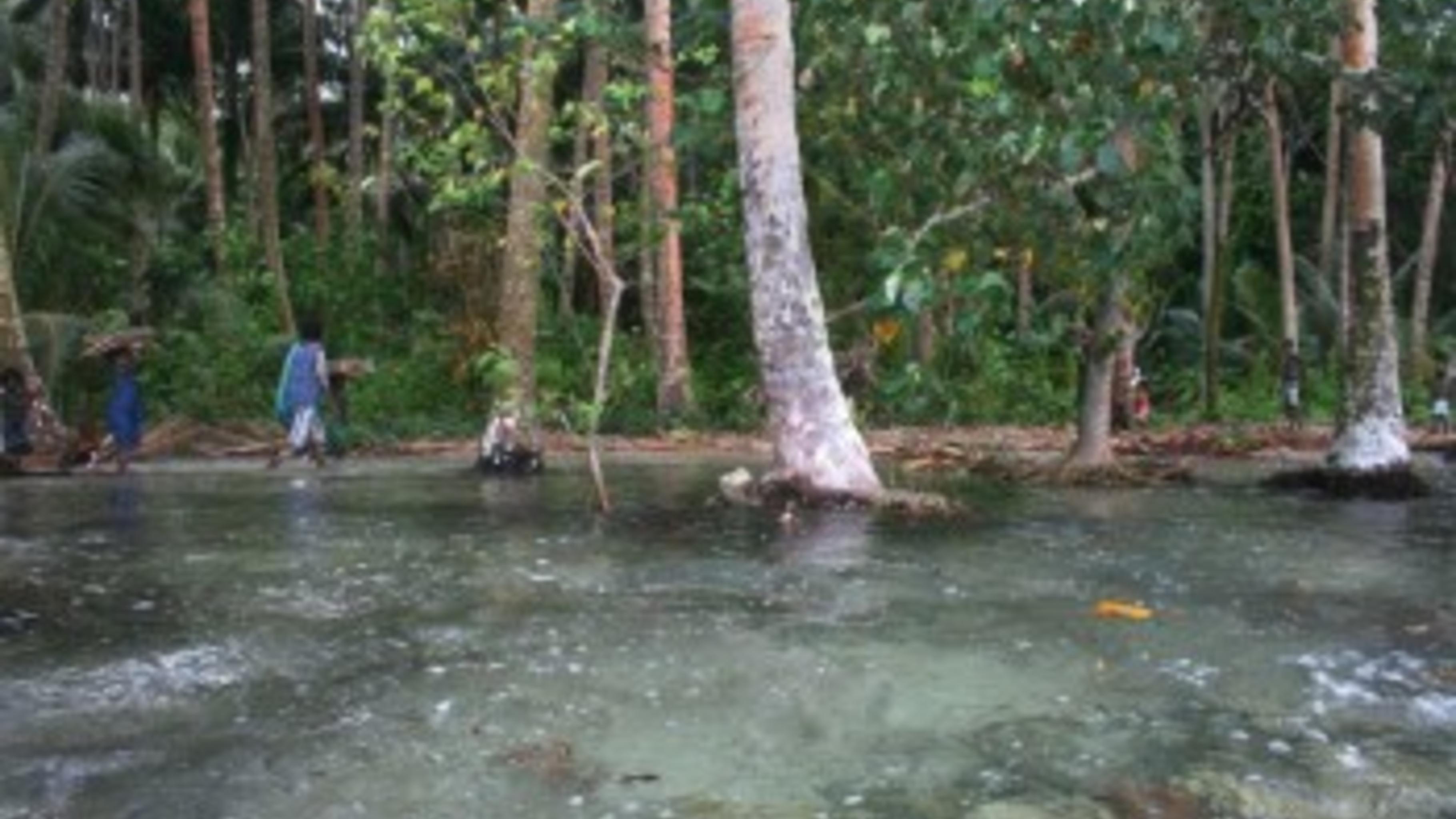 Die Küste des Carteret-Atolls: Das Salzwasser dringt ins Innere der Inseln vor.