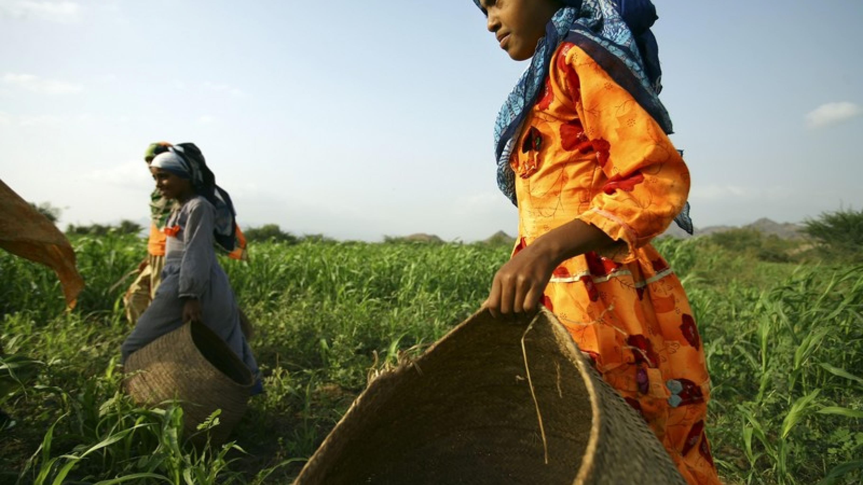 Die Rechte von Kleinbauern und Kleinbäuerinnen werden durch die freiwilligen Lei