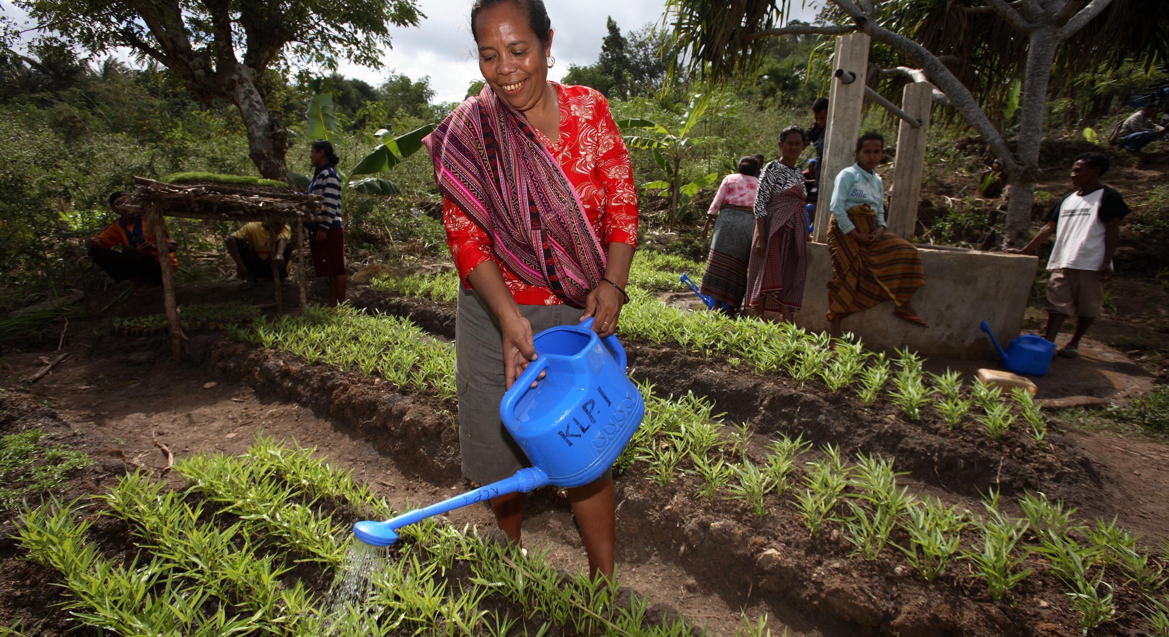 Eine Frau beim Bewässern ihres Gemüsegartens in in West Timor, Indonesion