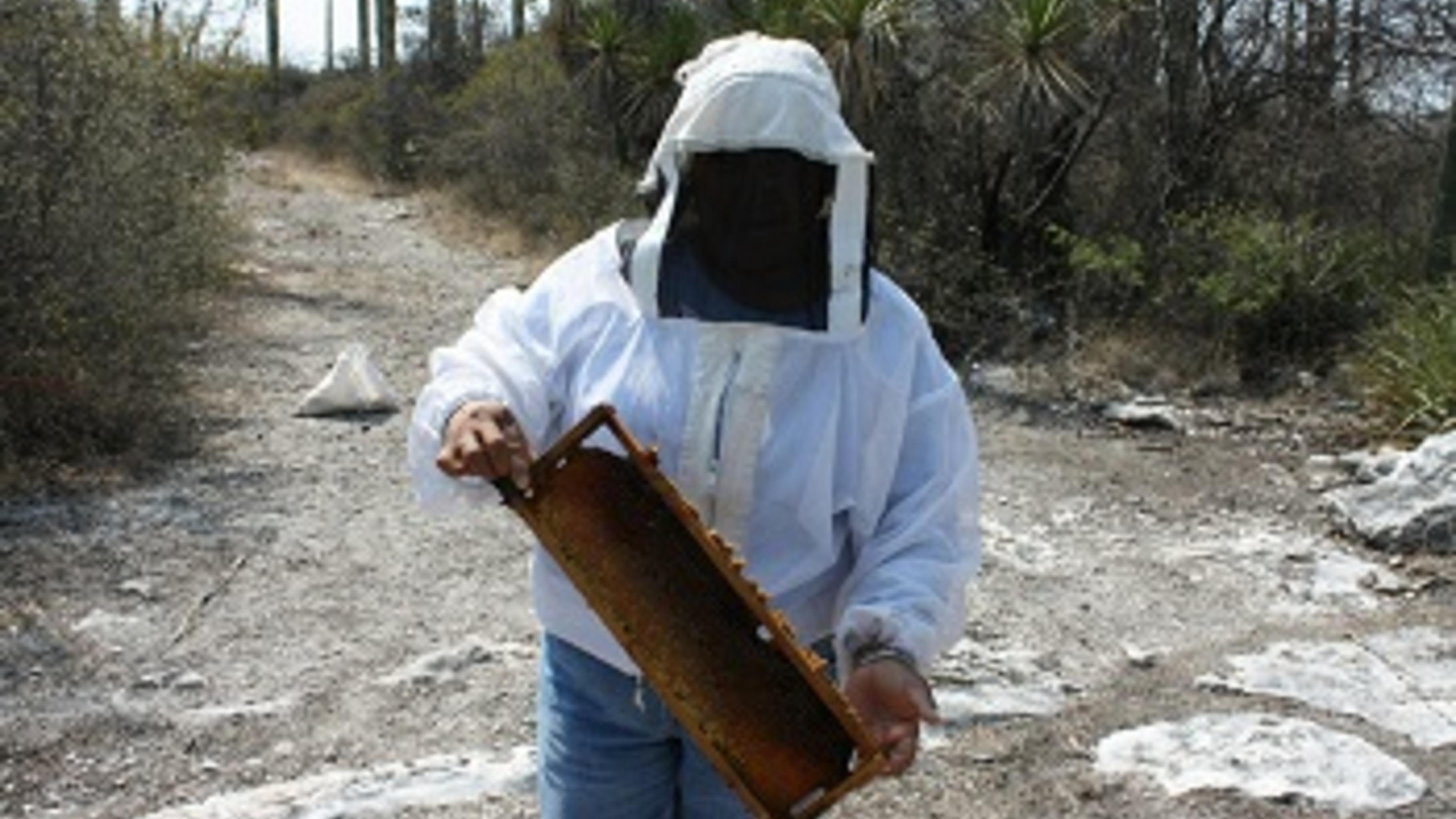 Oliveria Aguilar Perez erntet Honig aus ihren Bienenstöcken.