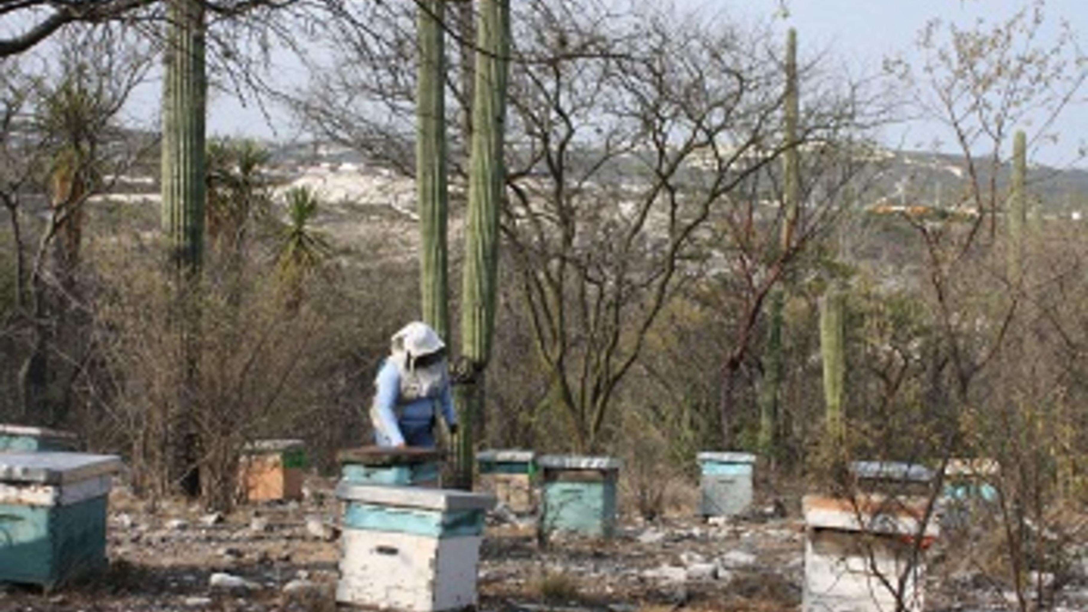Oliveria Aguilar Perez versorgt ihre Bienen in Tepexi, Mexiko.