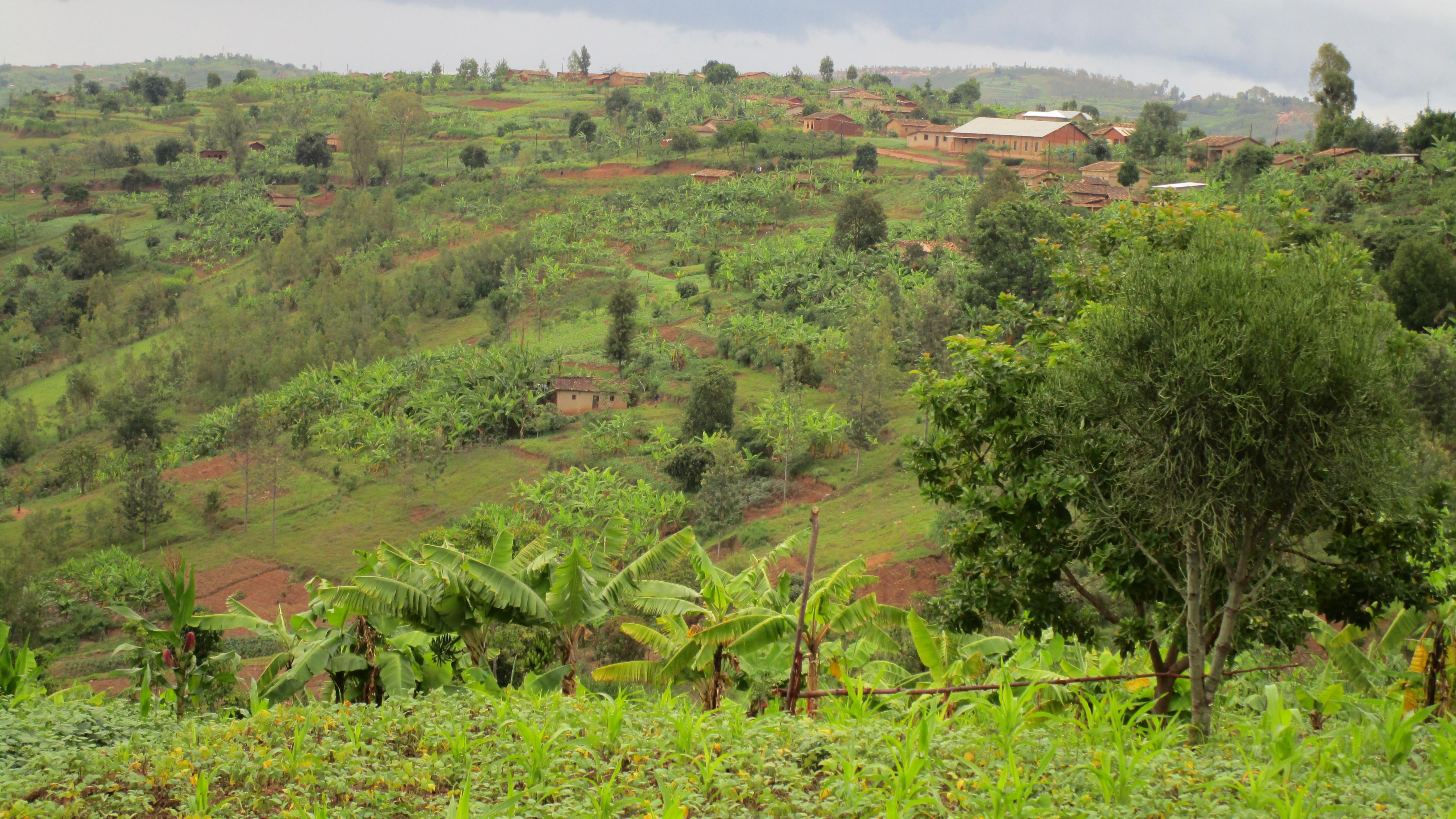 Hügellandschaft Ruanda