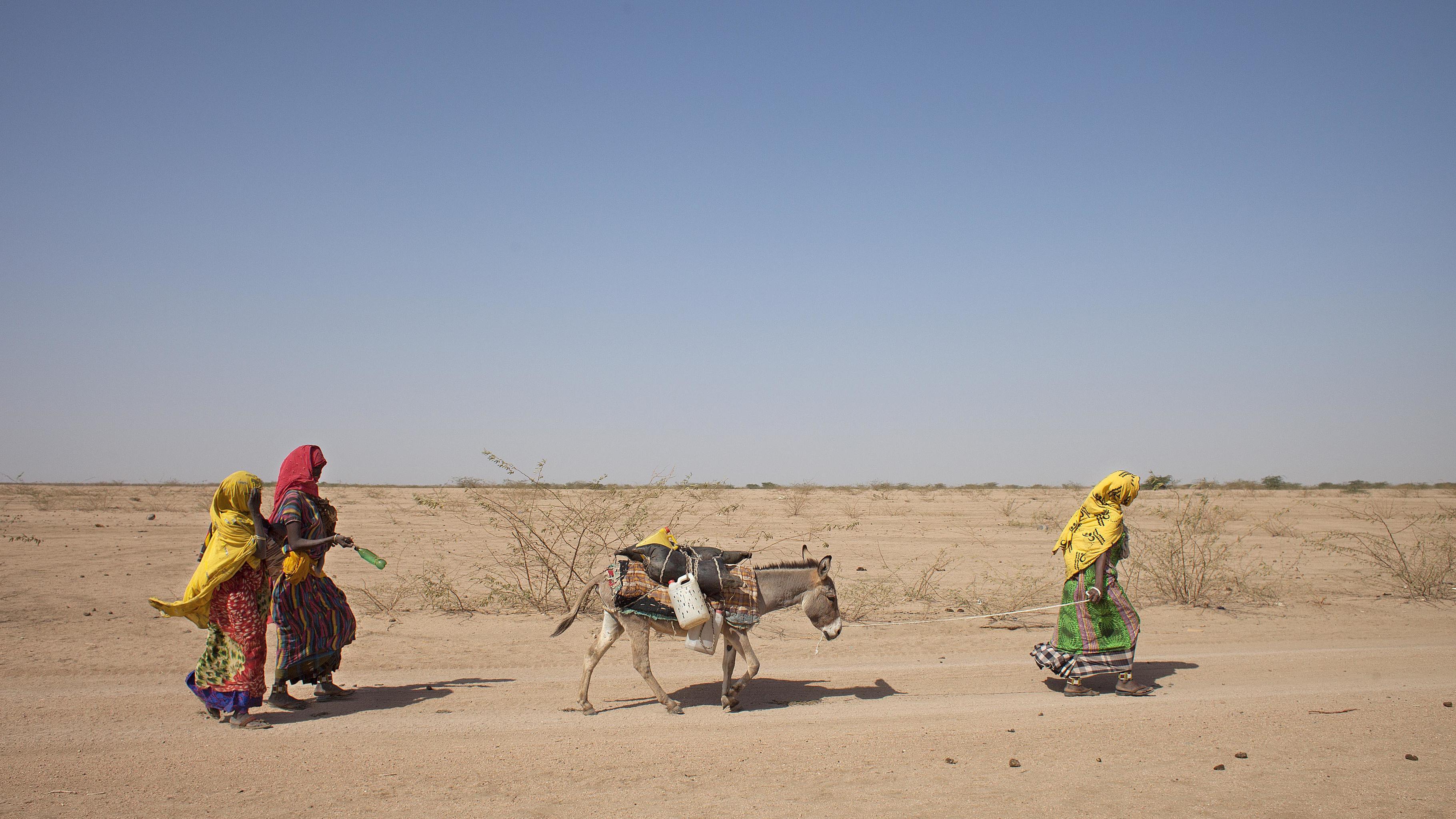 Habodo Gele und zwei Nachbarinnen kehren mit ihrem voll beladenen Esel vom Wassertank zurück.