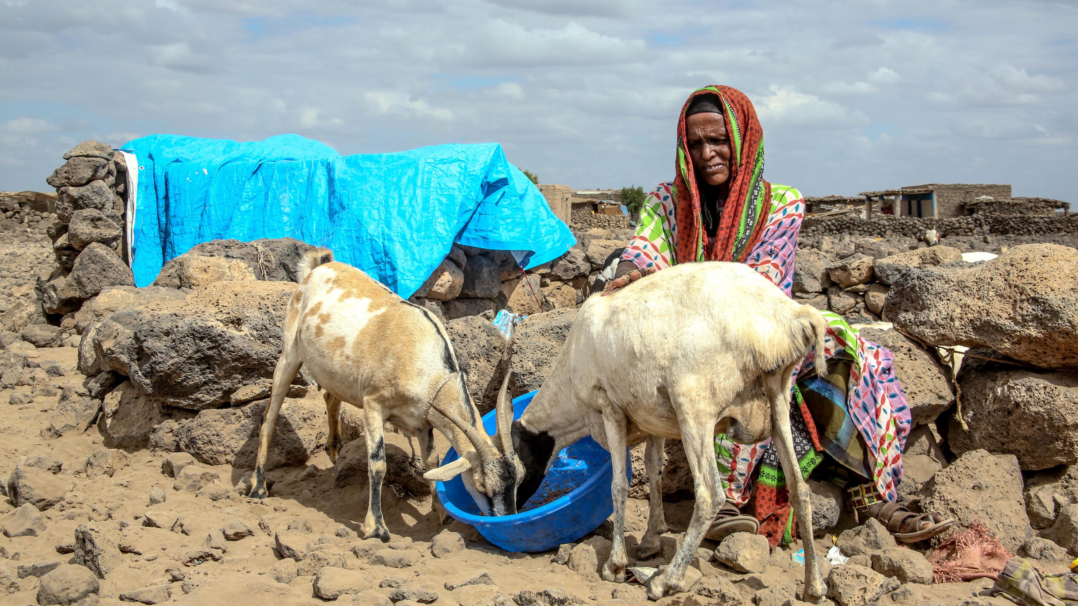 El Niño verstärkt die Dürre in Äthiopien: Buho bangt um das Überleben ihrer wenigen verbliebenen Tiere