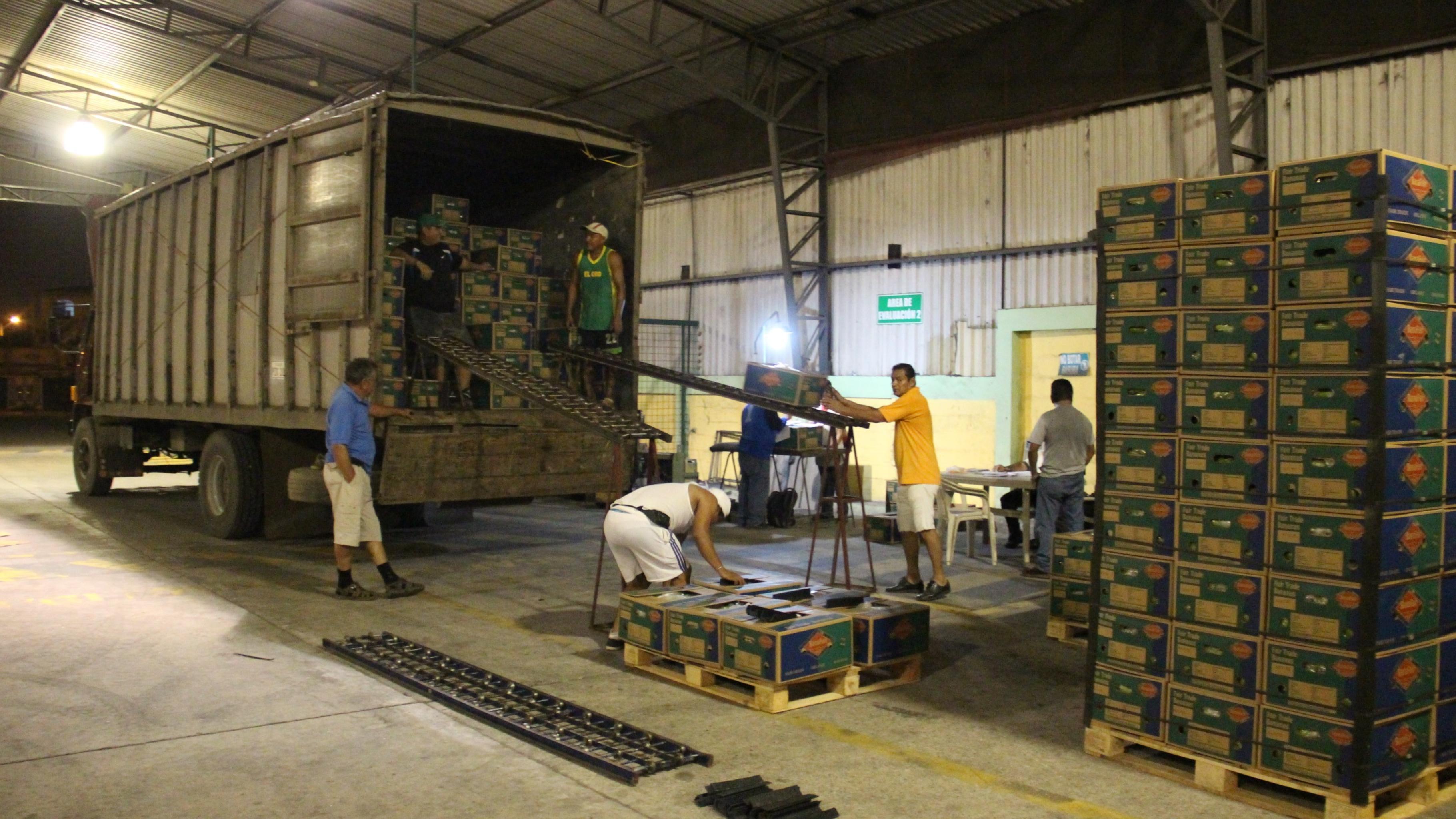 In der Hafenhalle von Machala werden Bananen-Kisten auf den LKW geladen