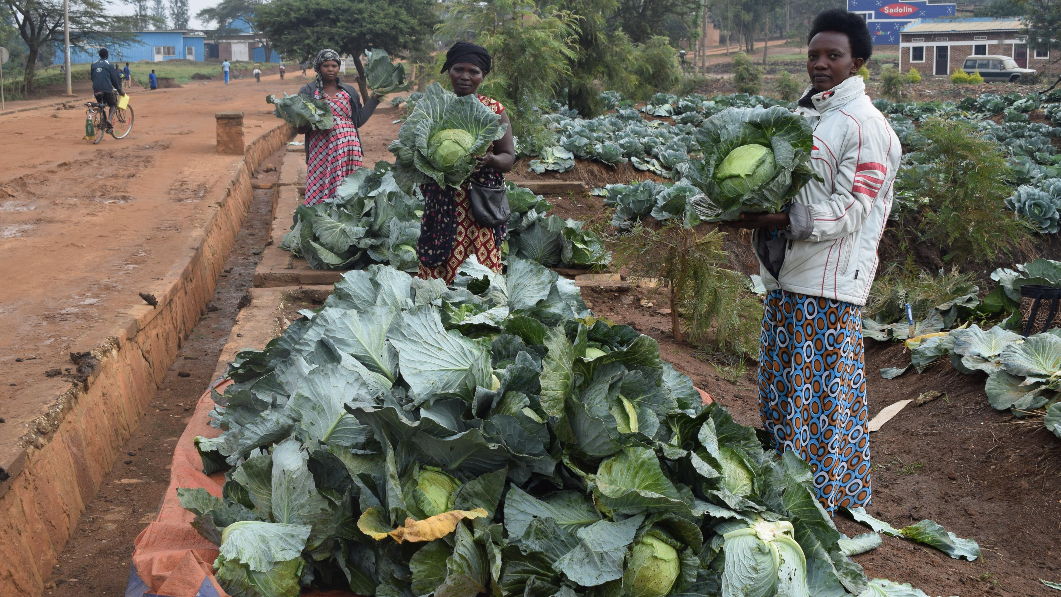 Verbesserung der landwirtschaftlichen Produktion und der  Ernährungssicherheit für Kleinbäuerinnen und -bauern in Ruanda