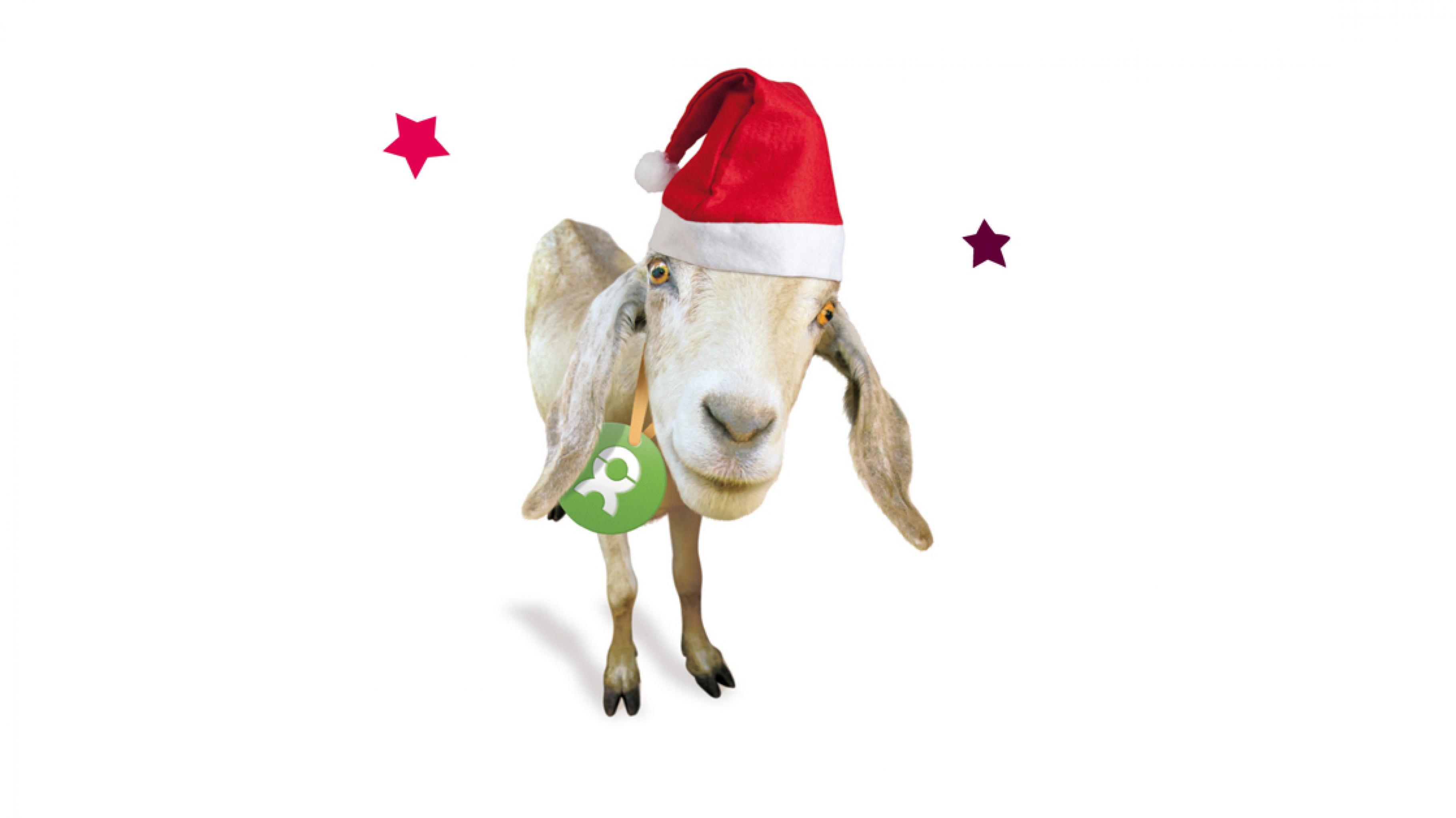 Oxfam Unverpackt Weihnachten Ziege