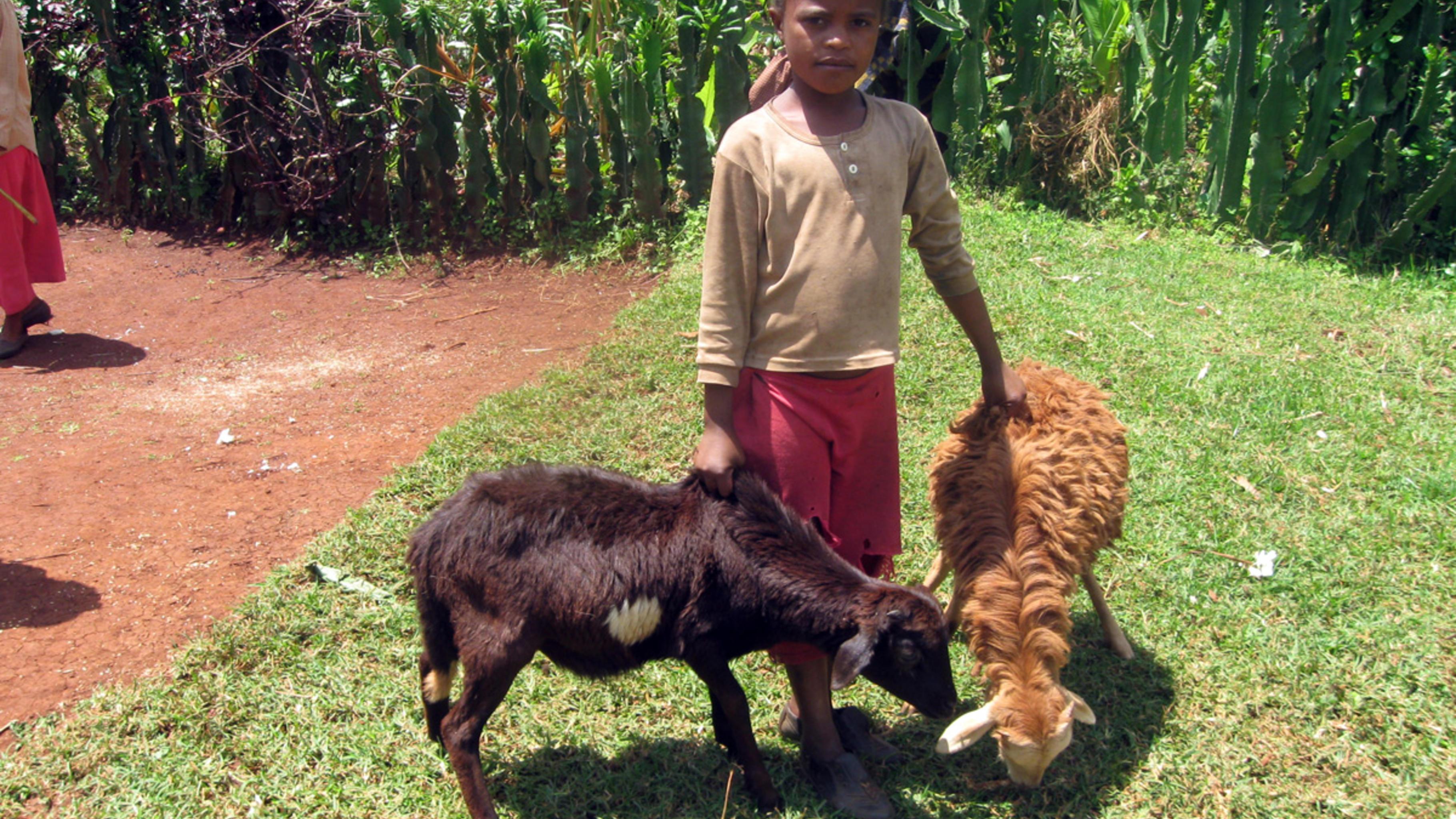 Oxfam Projekt in Äthiopien: Kind mit Ziegen