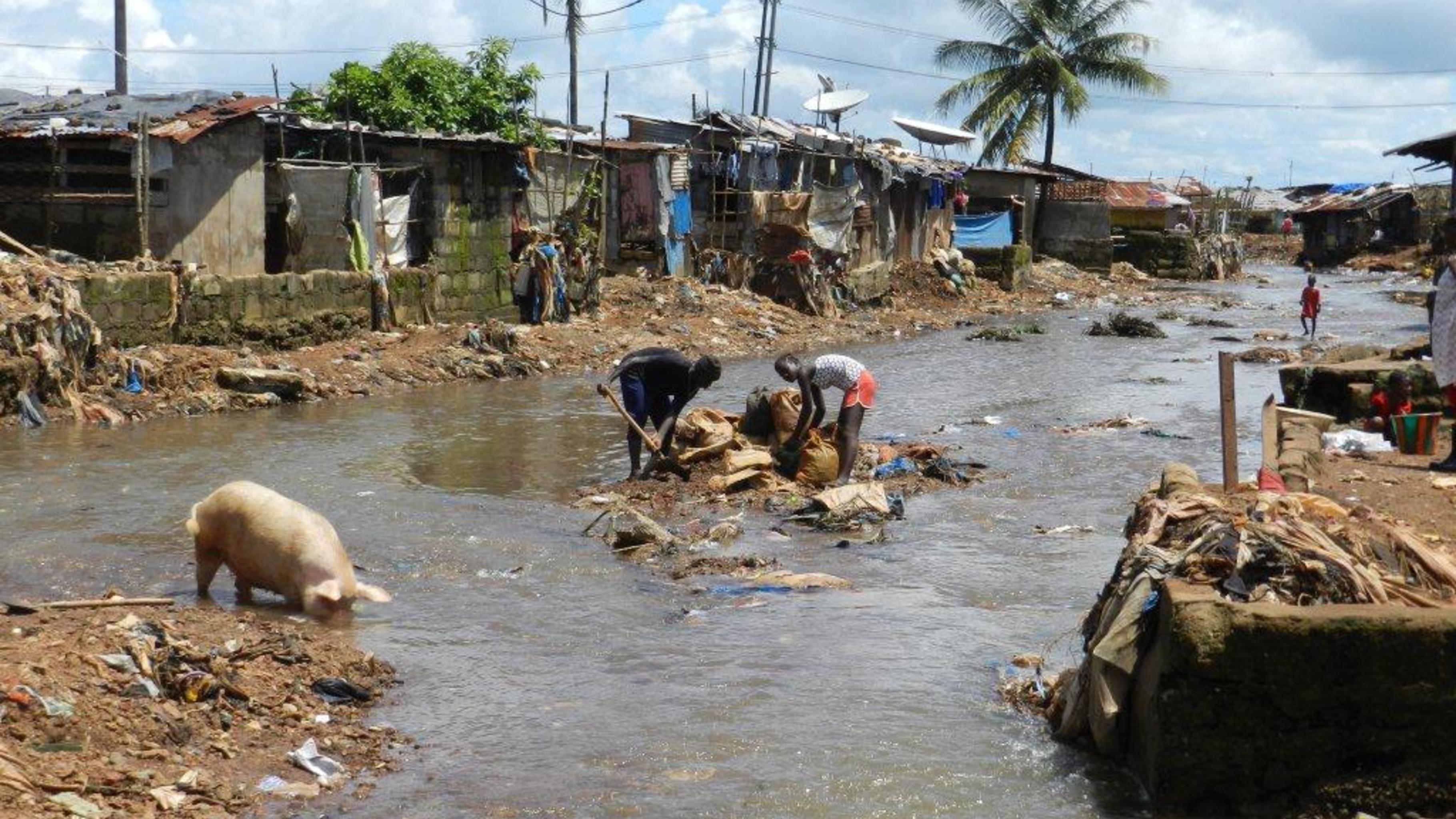 Foto: Ein Schwein wühlt im von Wasser umspülten Müll