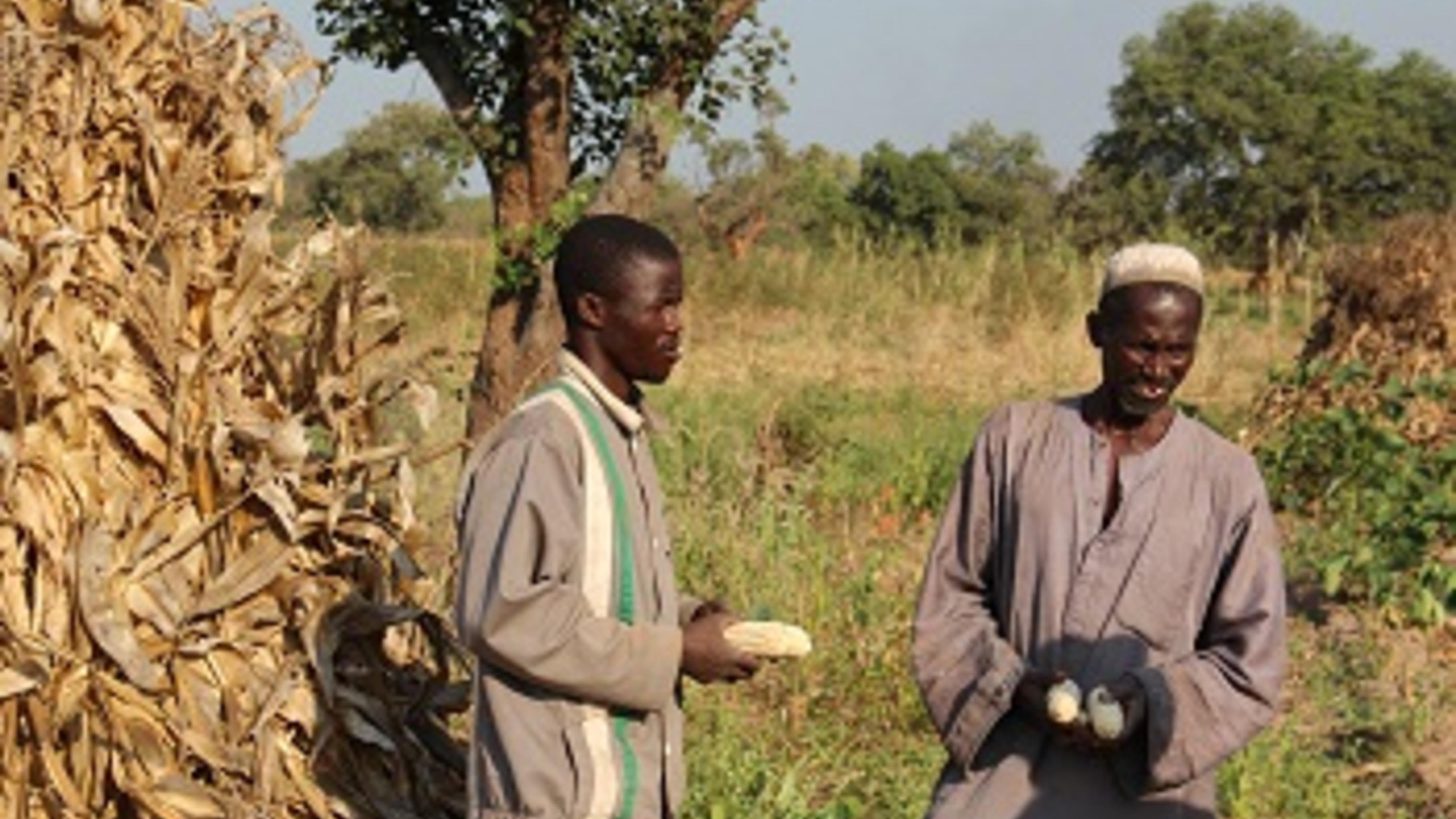 Vater und Sohn Fofana sind stolz auf den neuen Mais. ©Svenja Koch