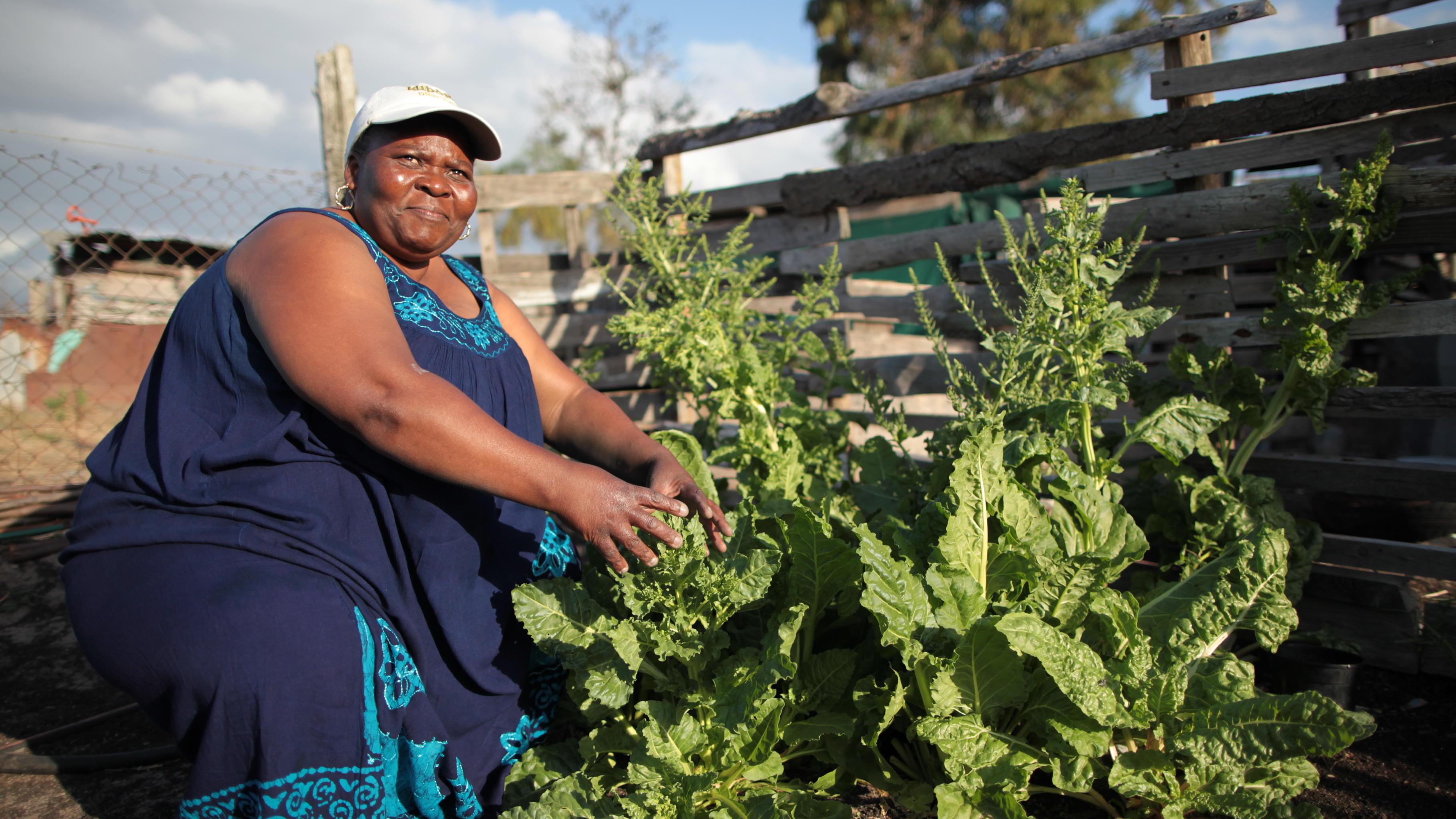 Frau pflanzt Gemüse an