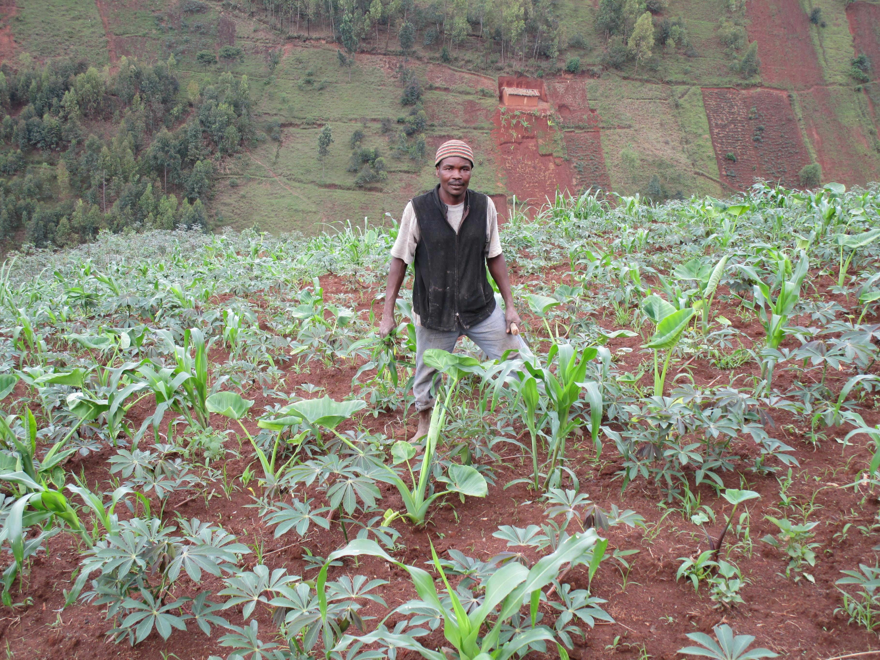 EIn burundischer Bauer auf seinem Feld