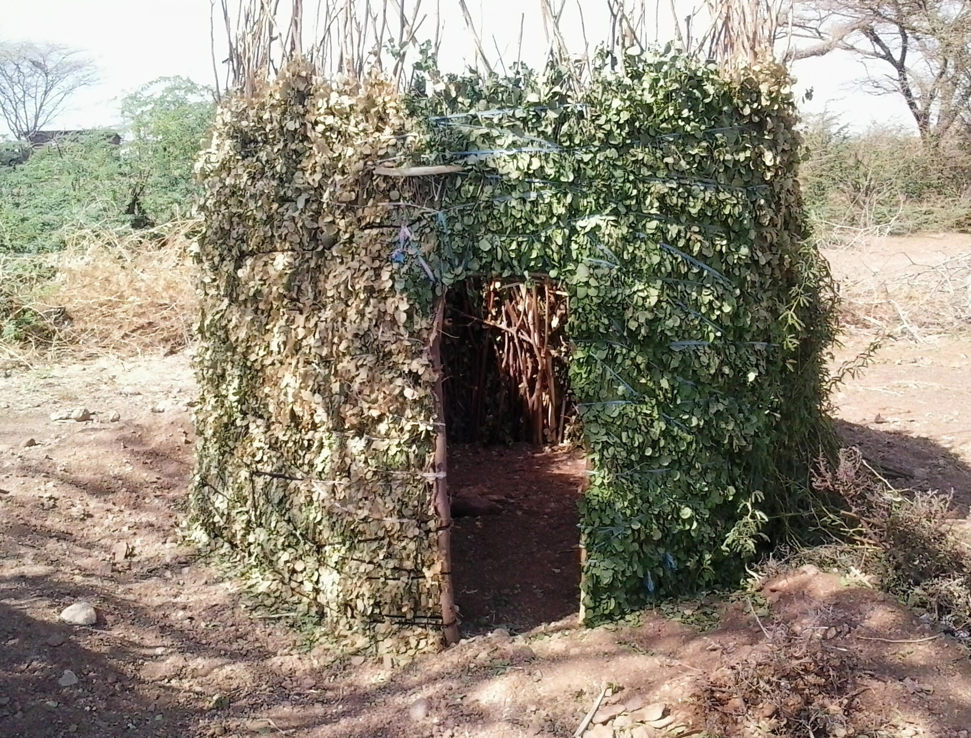 Eine Toilette aus Zweigen und Laub in Turkana West, Kenia
