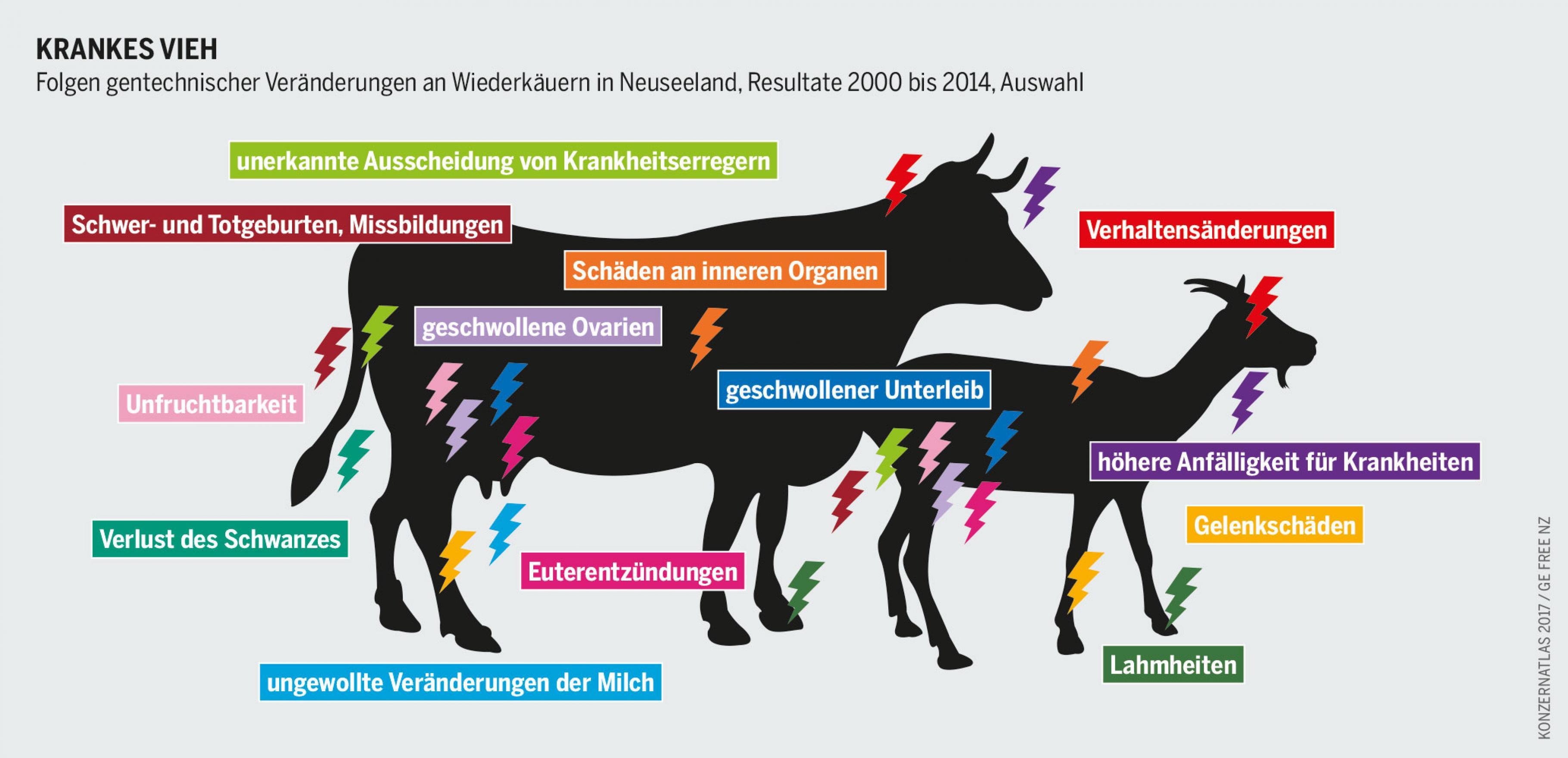 Der Umbau des Erbgutes von Nutztieren führt zu Schädigungen und Erkrankungen. Dennoch träumt die Kundschaft der Labors weiterhin vom resistenten Vieh.
