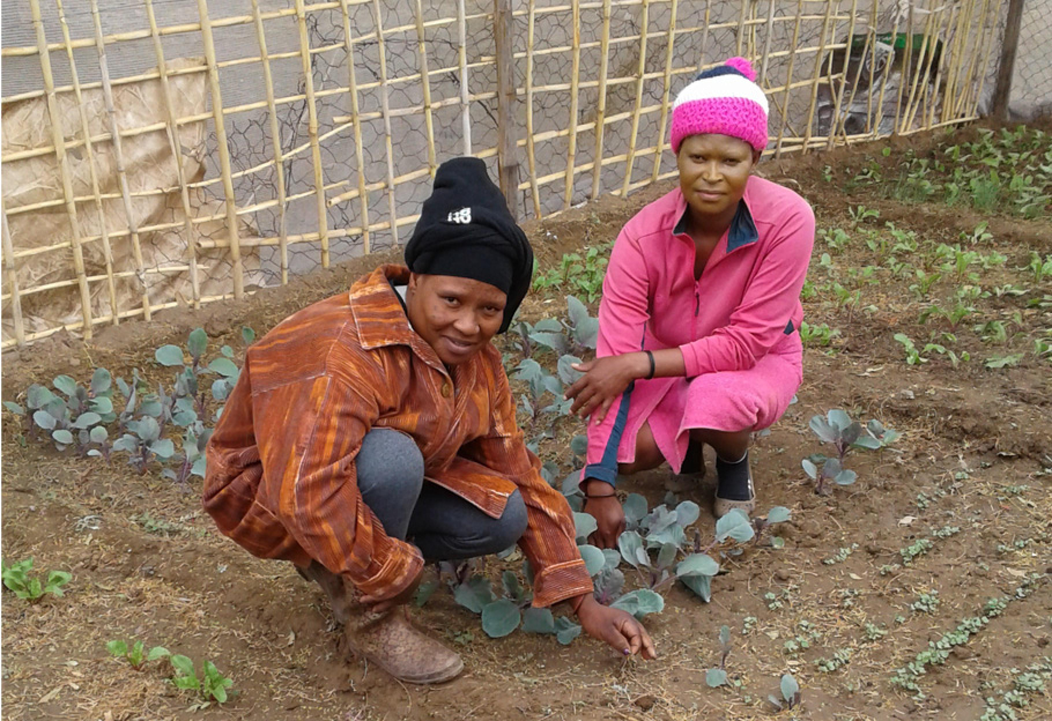Arbeiterinnen auf einer Farm in Südafrika