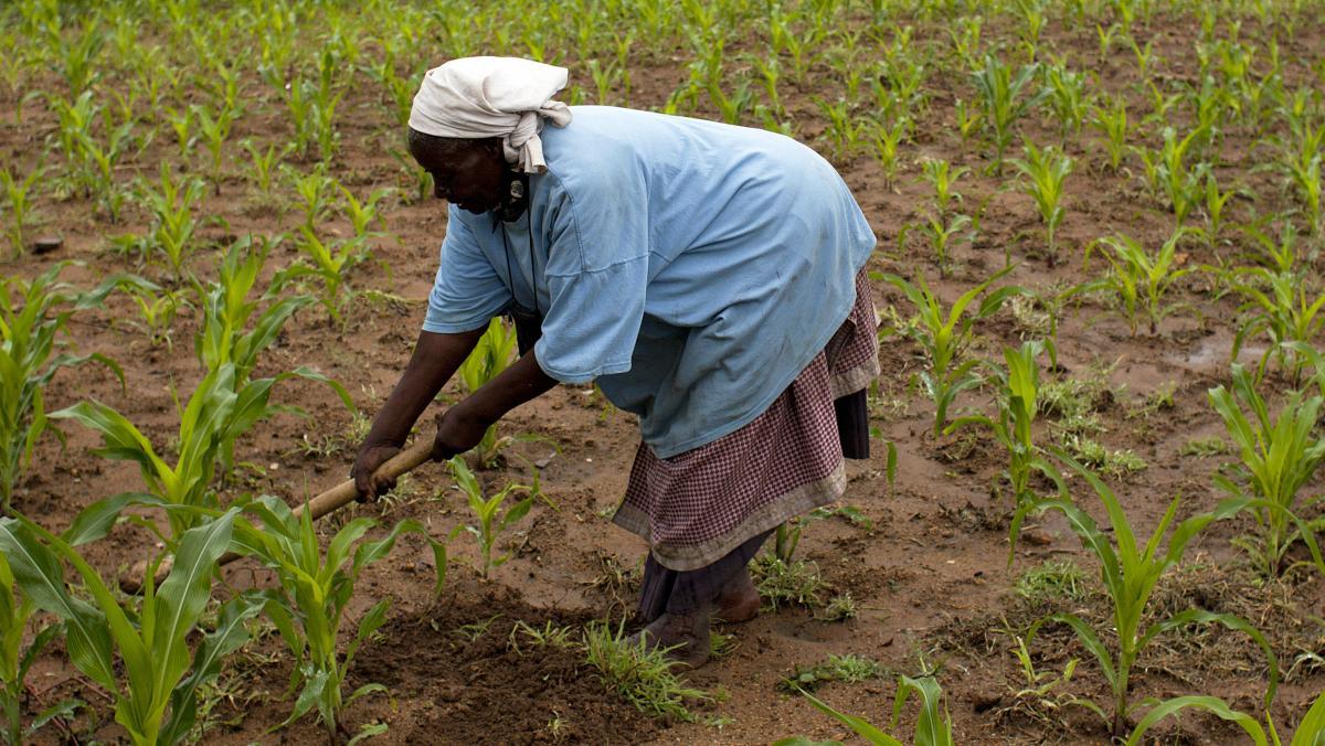 Preisbeispiele Simbabwe Saatgut