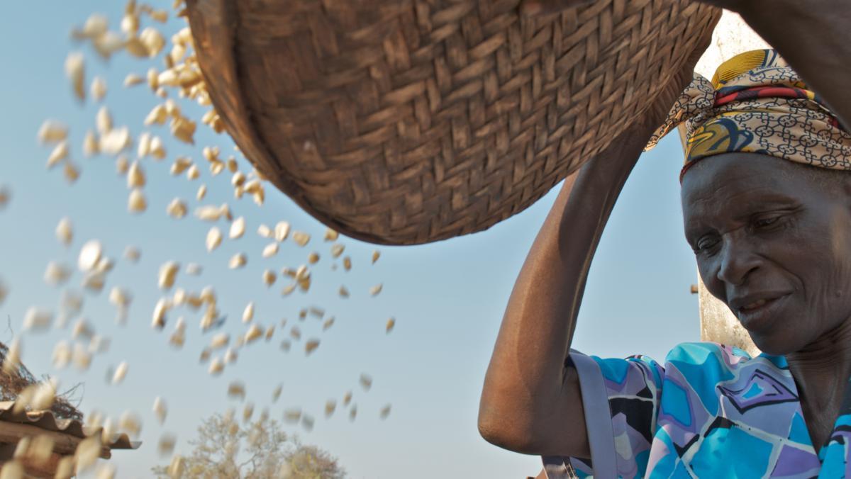 Gladys Kagura aus dem Distrikt Gutu, Simbabwe, kann dank eines von Oxfam entwickelten Bewässerungssystems ganzjährig anbauen und ist nicht mehr von Regenfällen abhängig.