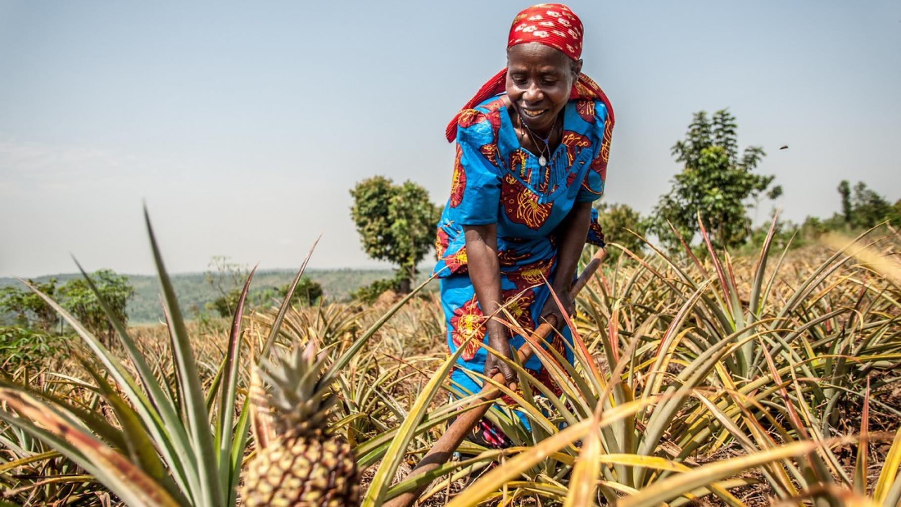 Theresie Nyirantozi bei ihrer Arbeit auf einer Ananas-Plantage