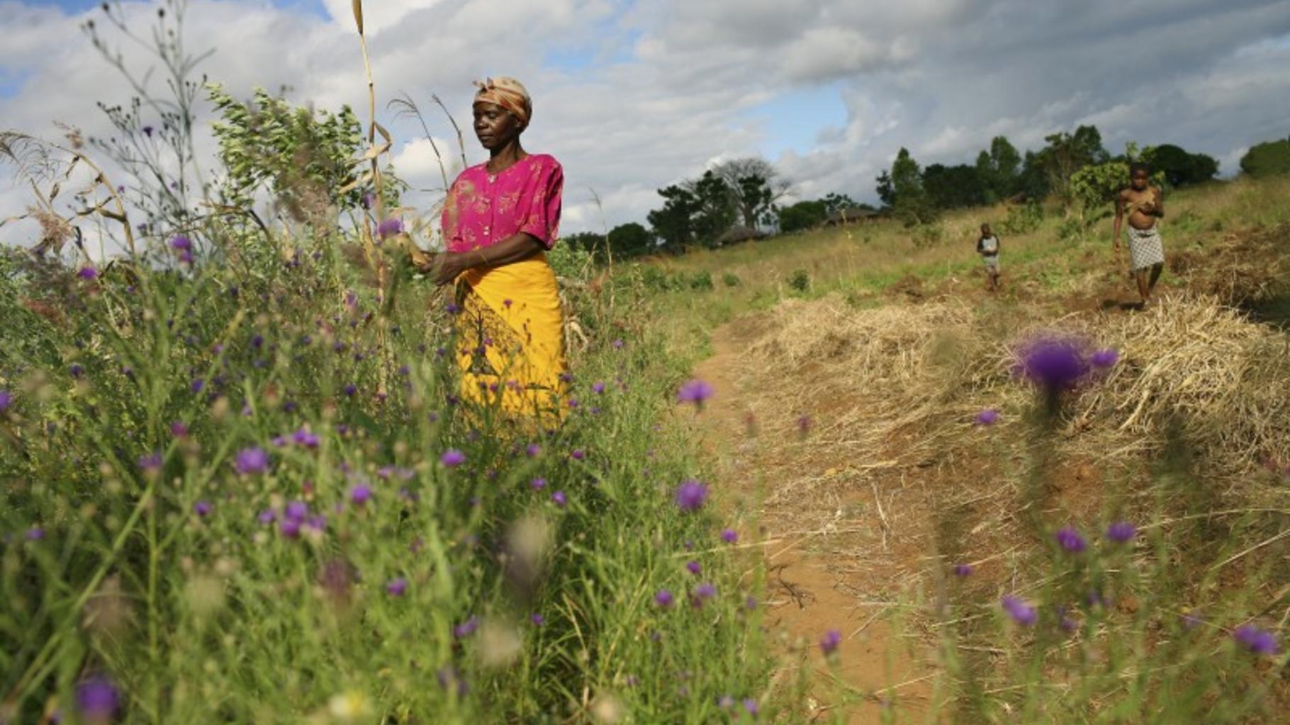 Estela Njolo, Kleinbäuerin aus Kunthembwe, lebt vom Maisanbau.