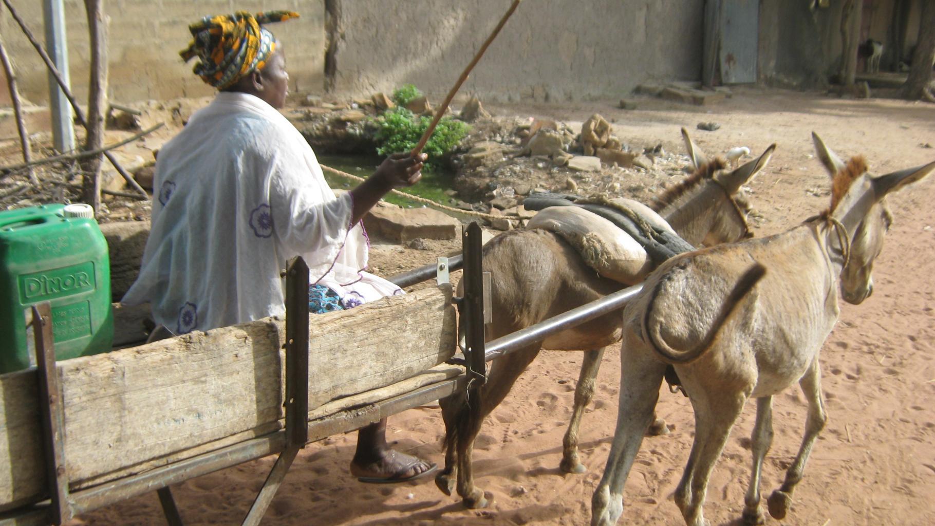 Fanta Diarra auf dem Weg zu ihren Baumwollfeldern.