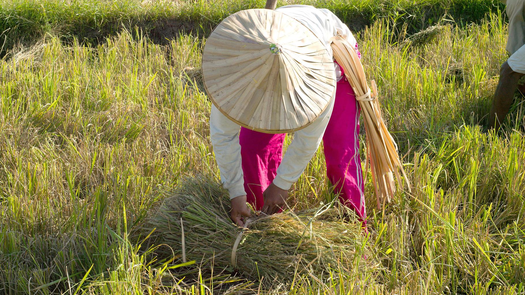 Jilena Pineda lernte im Oxfam Workshop das System of Rice Intensification kennen