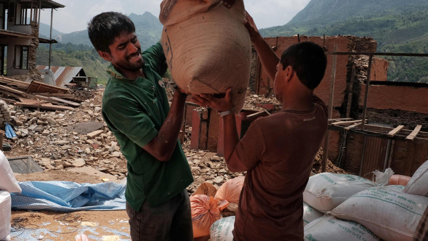 Freiwillige Helfer verteilen Reissamen.