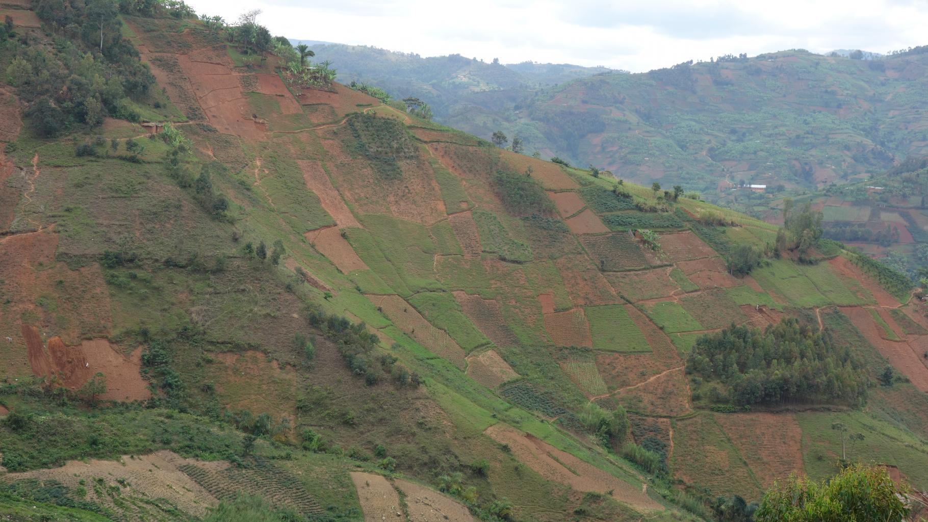 Ein Flickenteppich von bewirtschafteten Feldern an steilen Abhängen