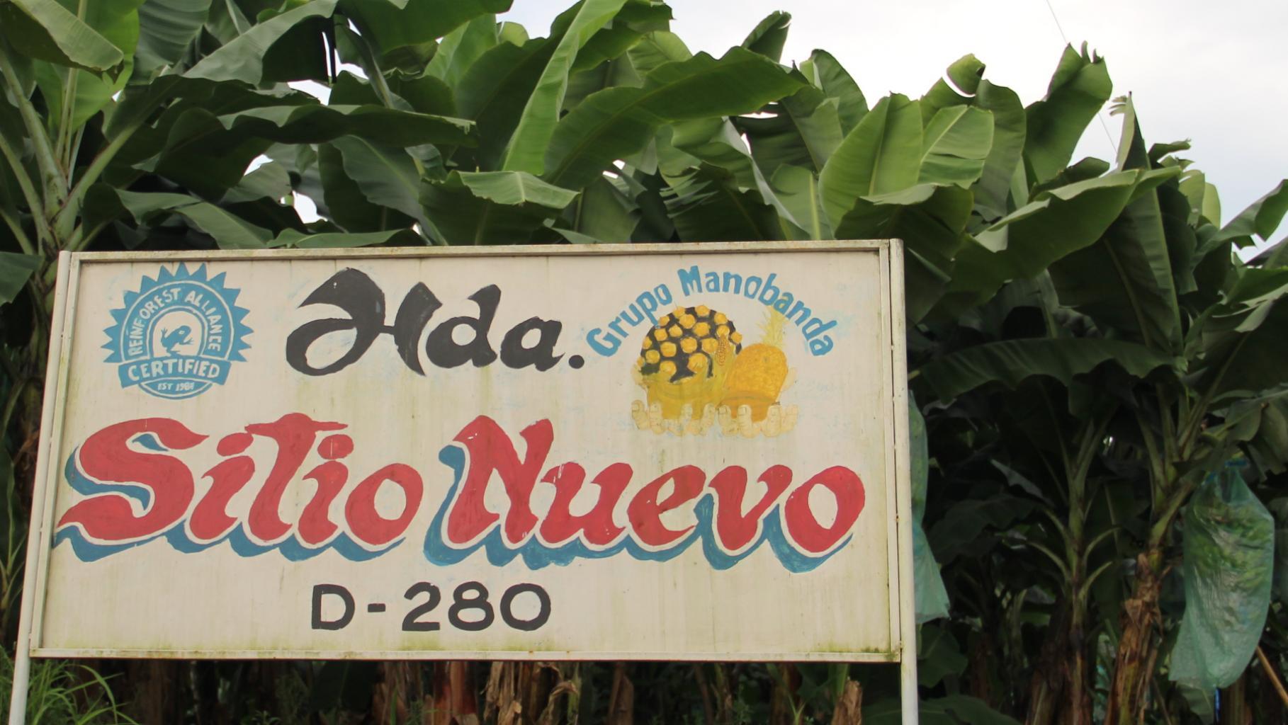 """Ein Schild mit der Aufschrift """"Hda. Sitio Nuevo, D-280, Grupo Manobanda"""" und dem Rainforest-Alliance-Siegel"""