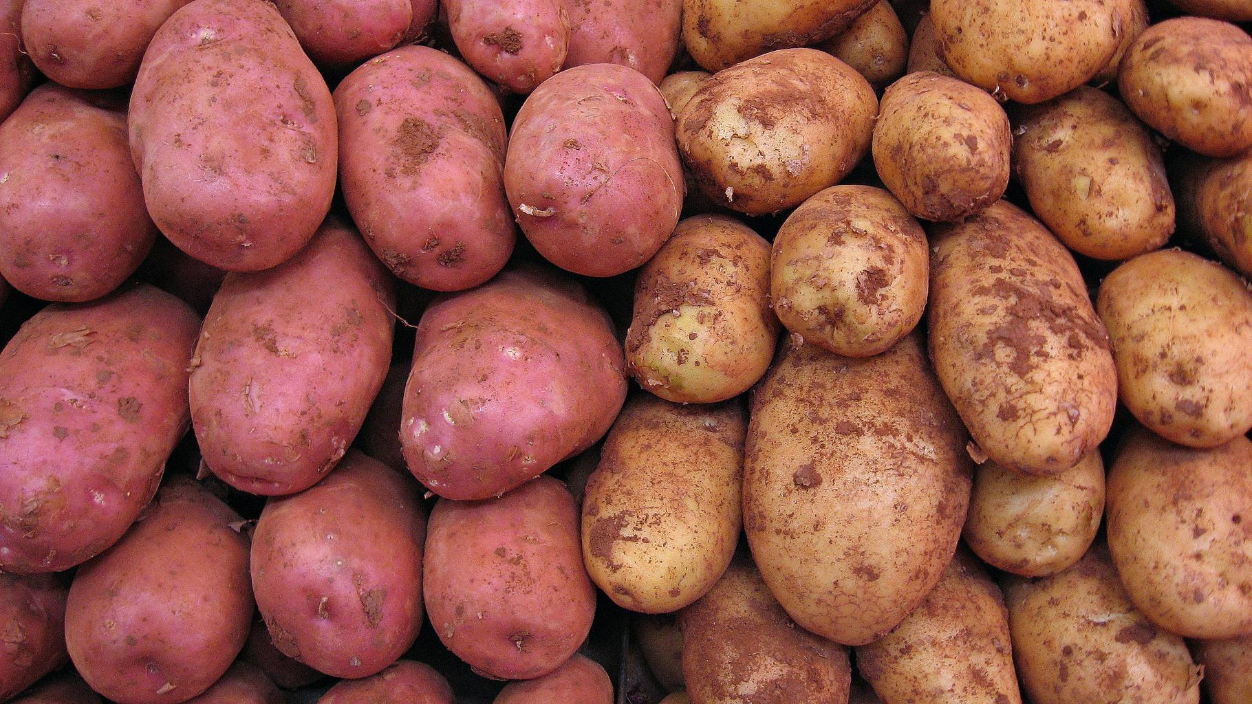 Zwei Sorten Kartoffeln