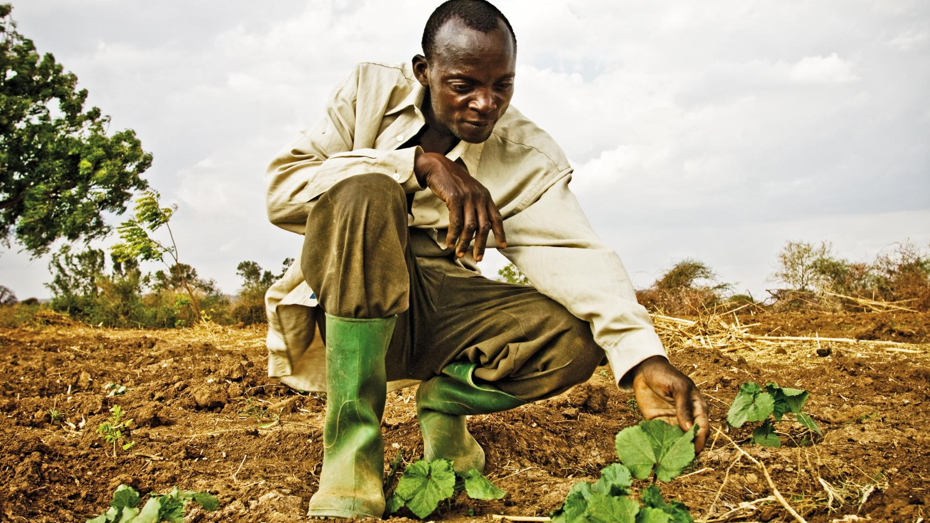 Mann in Tansania baut auf einem Feld Gemüse an