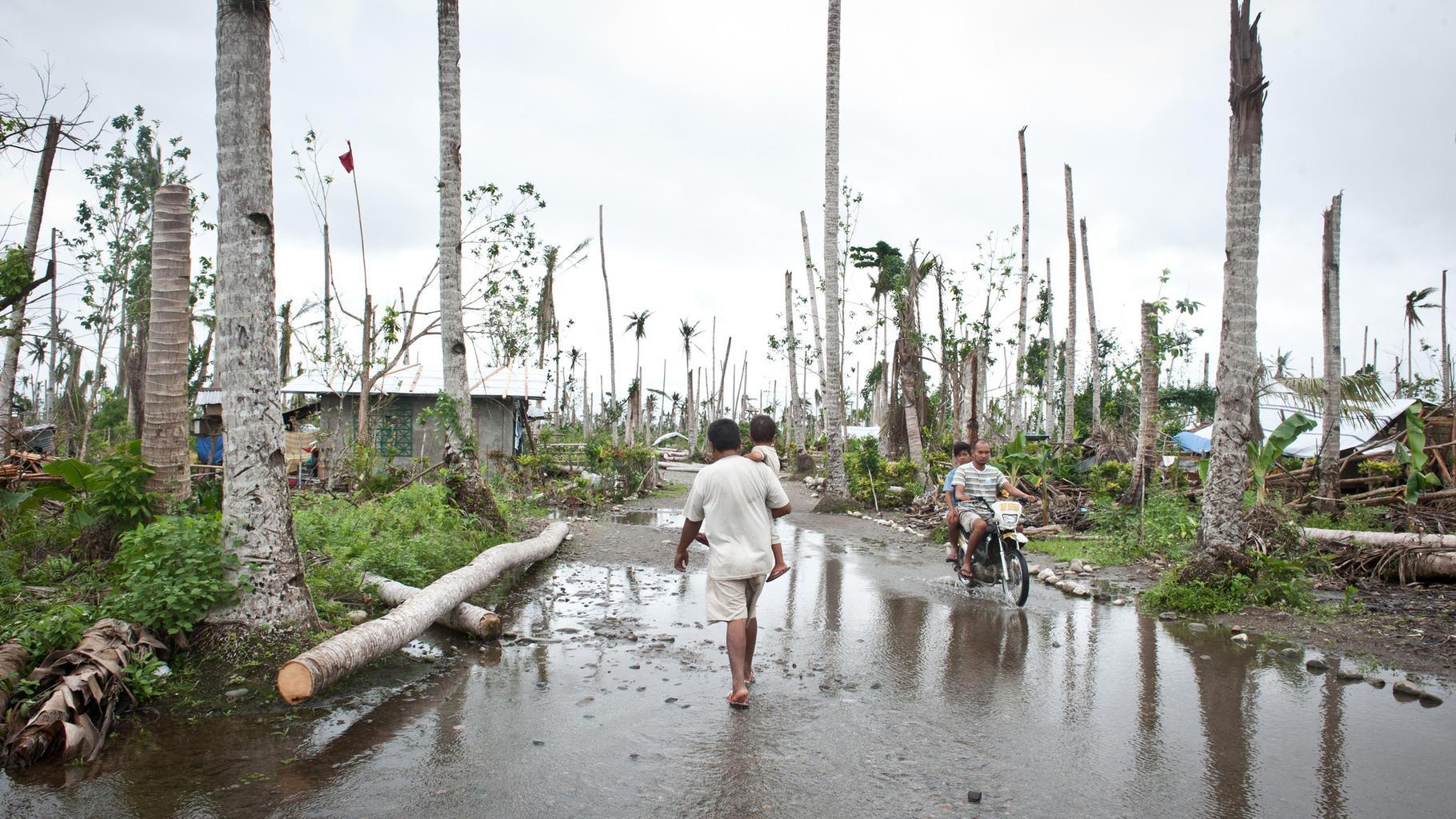 Der Taifun Haiyan zerstörte 90 Prozent der Kokosnusspalmen in Leyte, Philippinen, 2014.