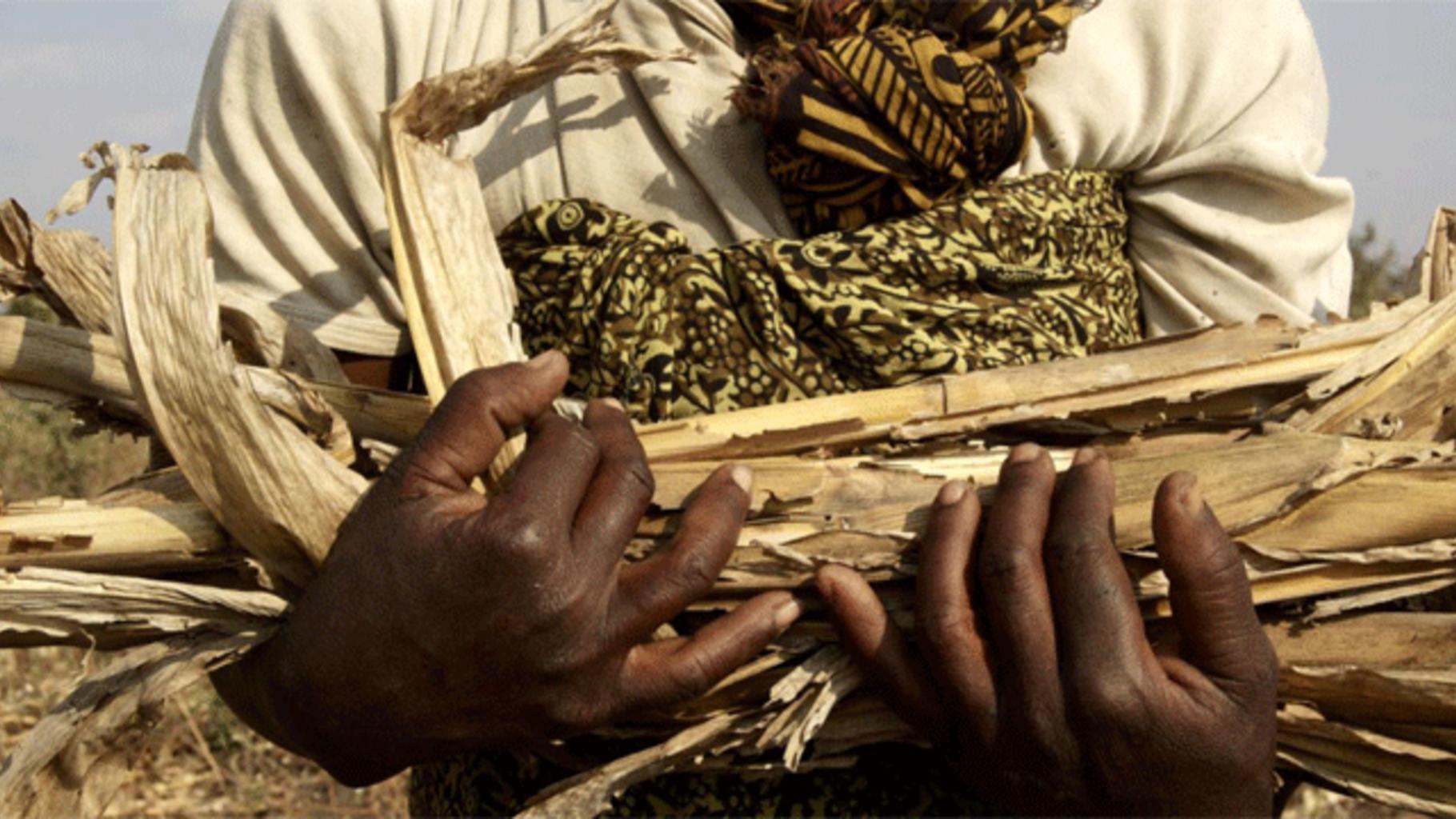 Mega-PPPs in der afrikanischen Landwirtschaft bringen hohes Risiko