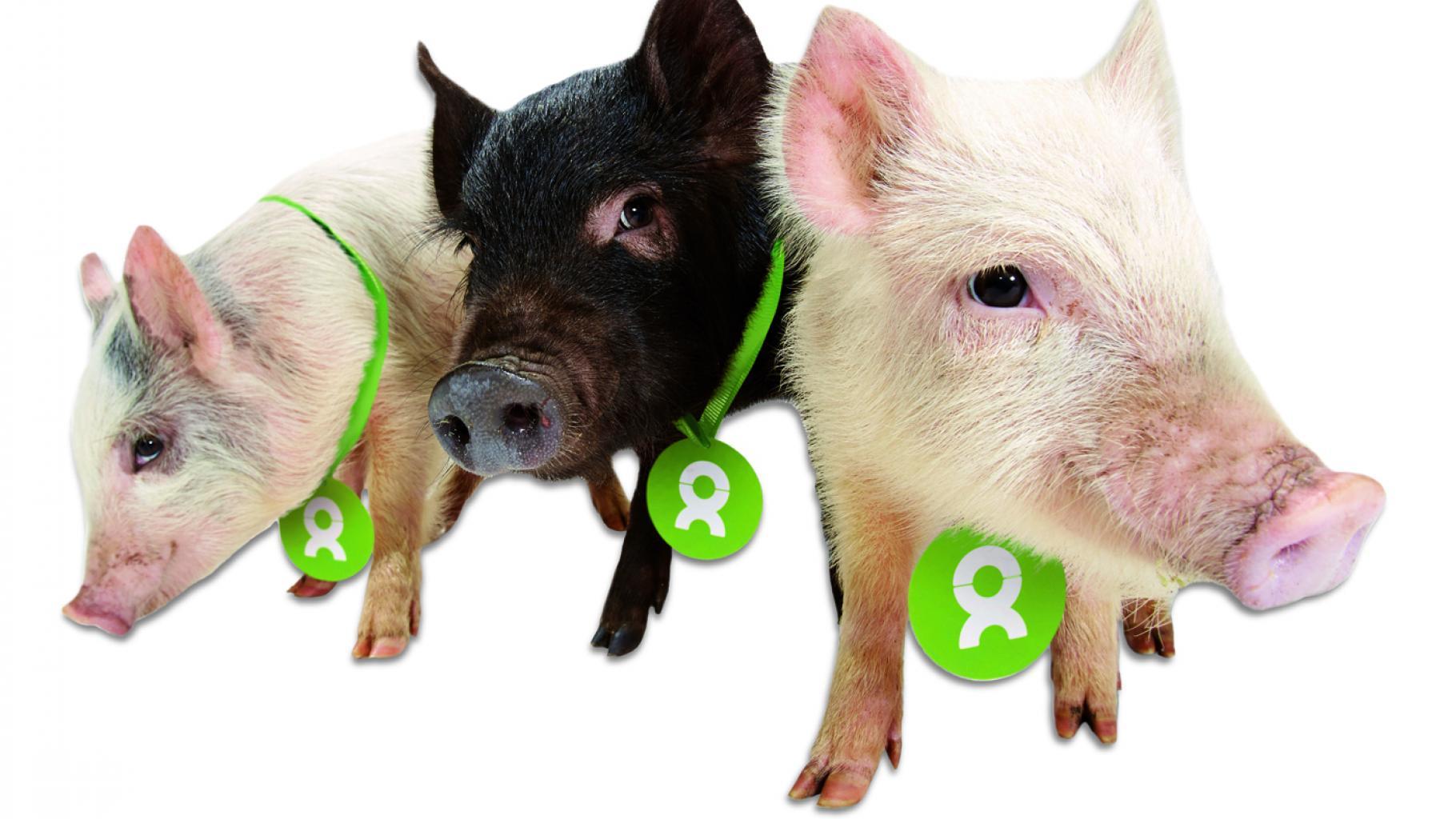 Geschenk Saubande von OxfamUnverpackt