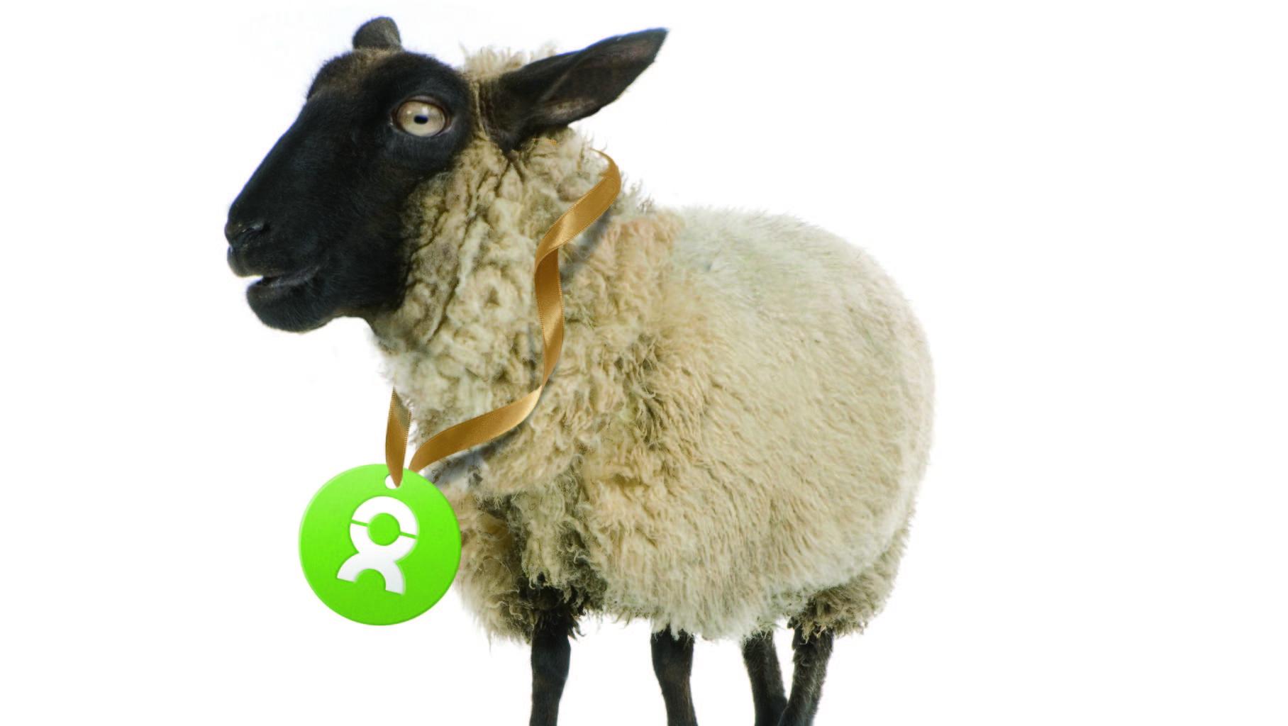 """Geschenk """"Schaf"""" von OxfamUnverpackt.de"""