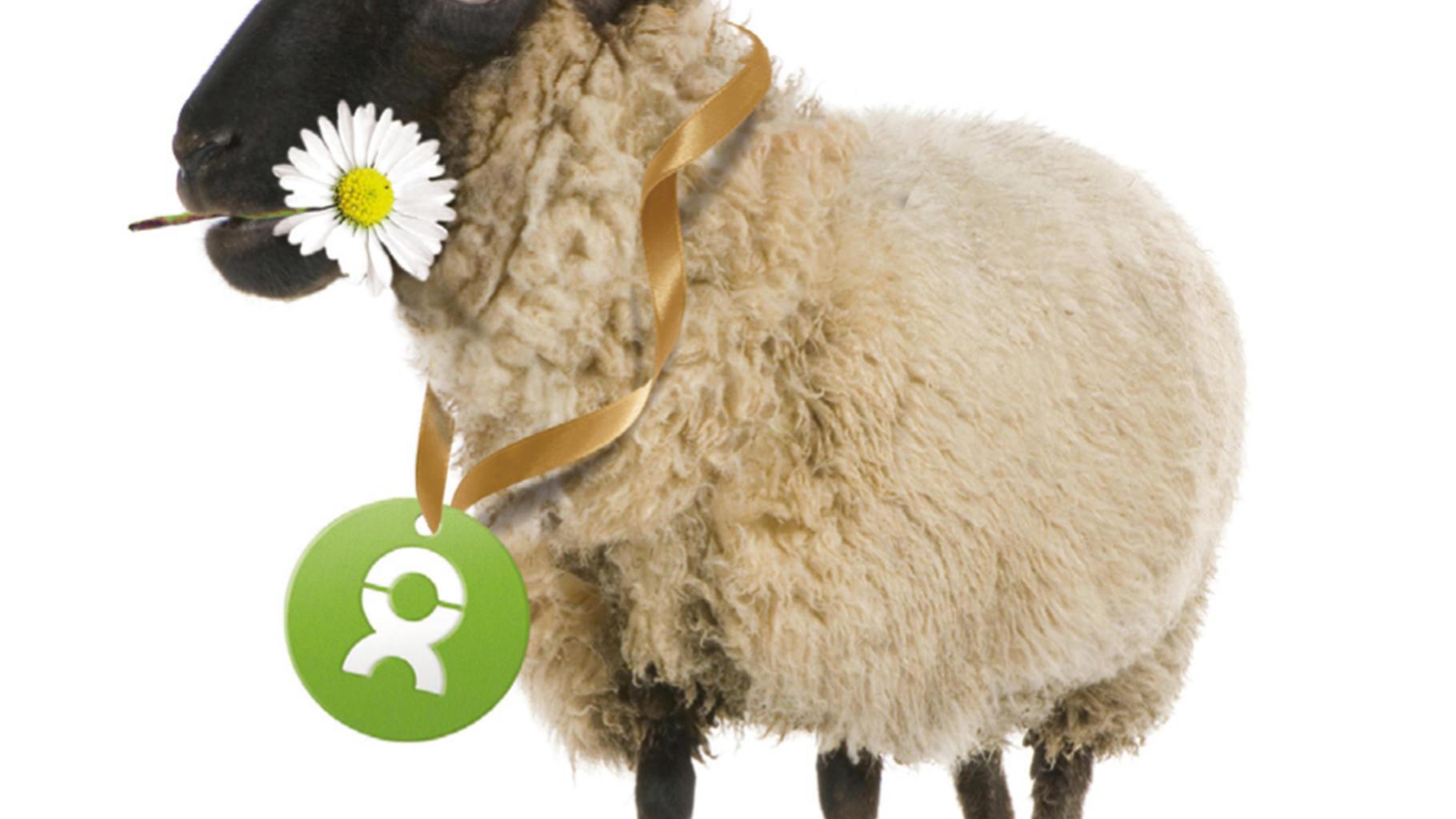 Charity-Geschenke zum Muttertag: ein kuscheliges Schaf