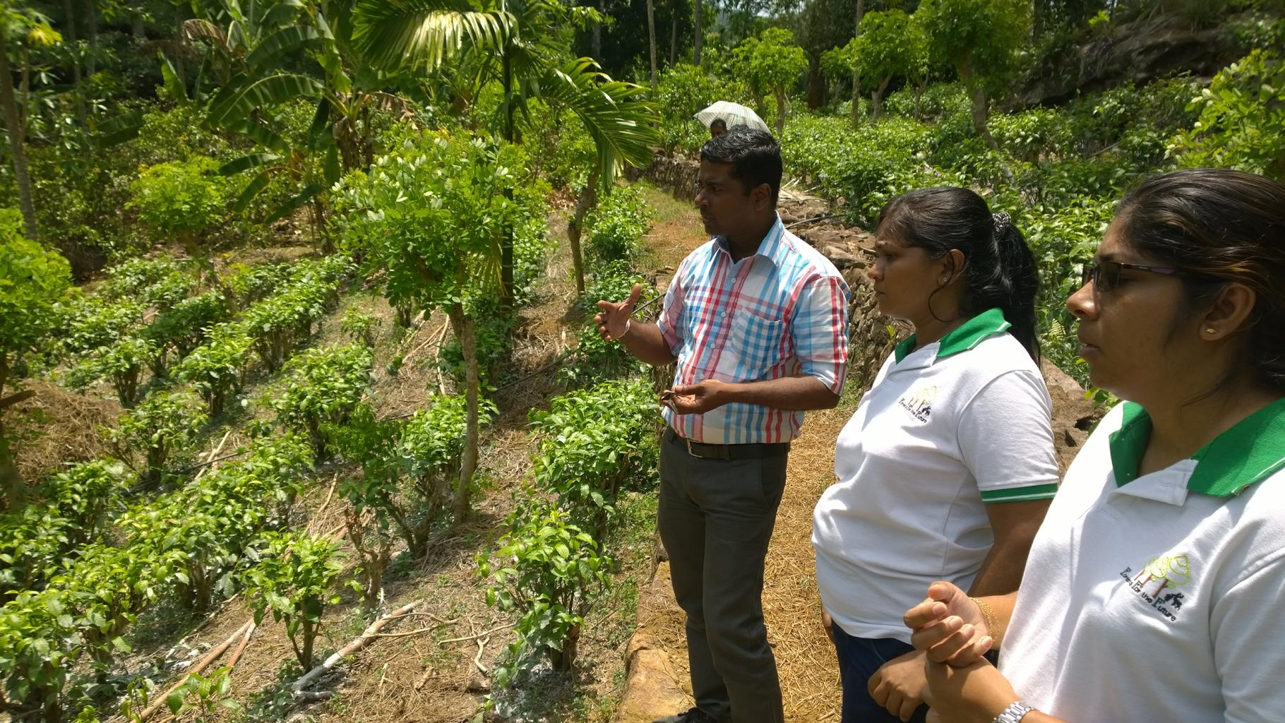 Mitarbeiter*innen von Rainforest Rescue International (RRI) schulen lokale Kleinbauernfamilien