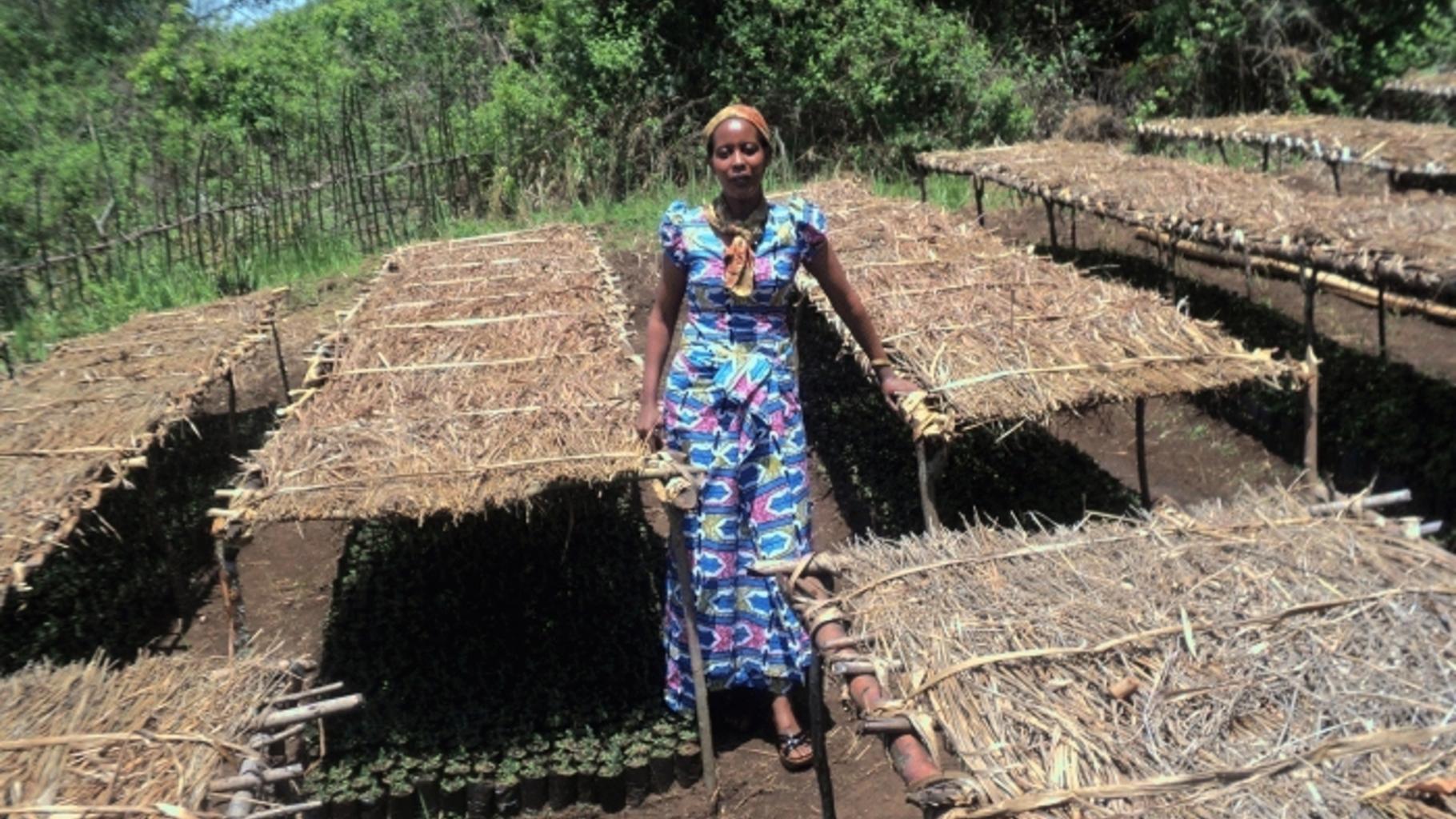 Die Frauenbeauftragte von UGEAFI begutachtet die Fortschritte in den Baumschulen