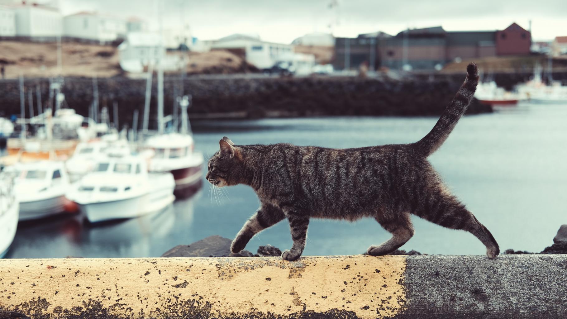 Eine schwarz-graue Katze schleicht auf einer Mauer, im Hintergrund ein Jachthafen
