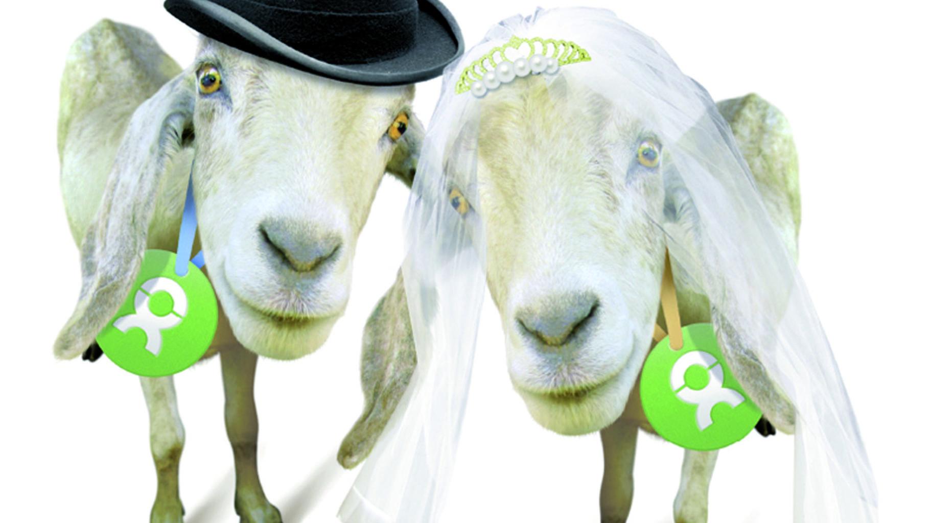 OxfamUnverpackt Ziegenpaar