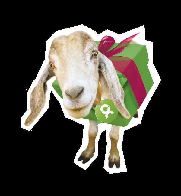 Eine Ziege als Geschenk